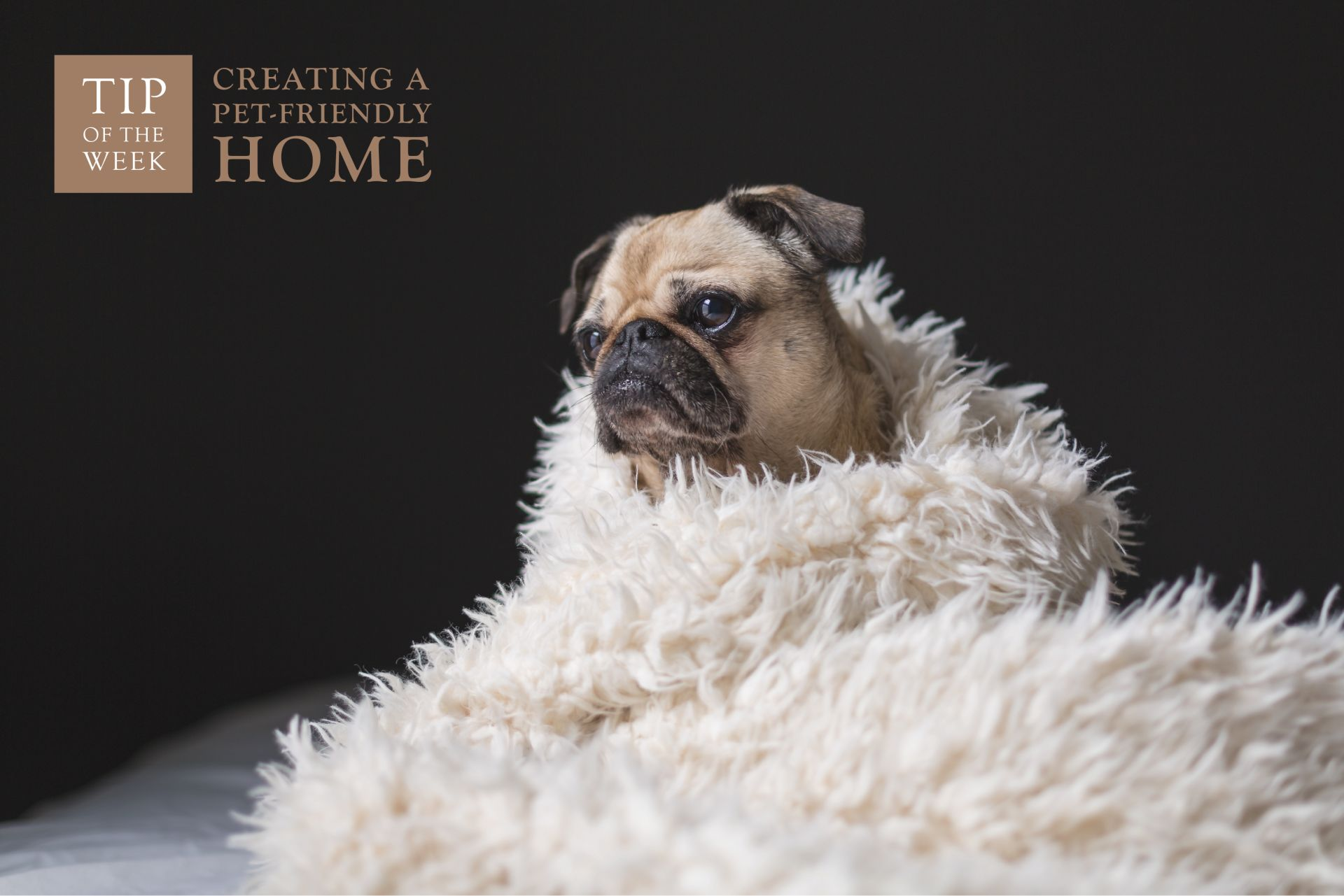 Creating a Pet-Friendly Home