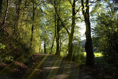 Local Walking Paths & Hiking Trails You Don't Want to Miss