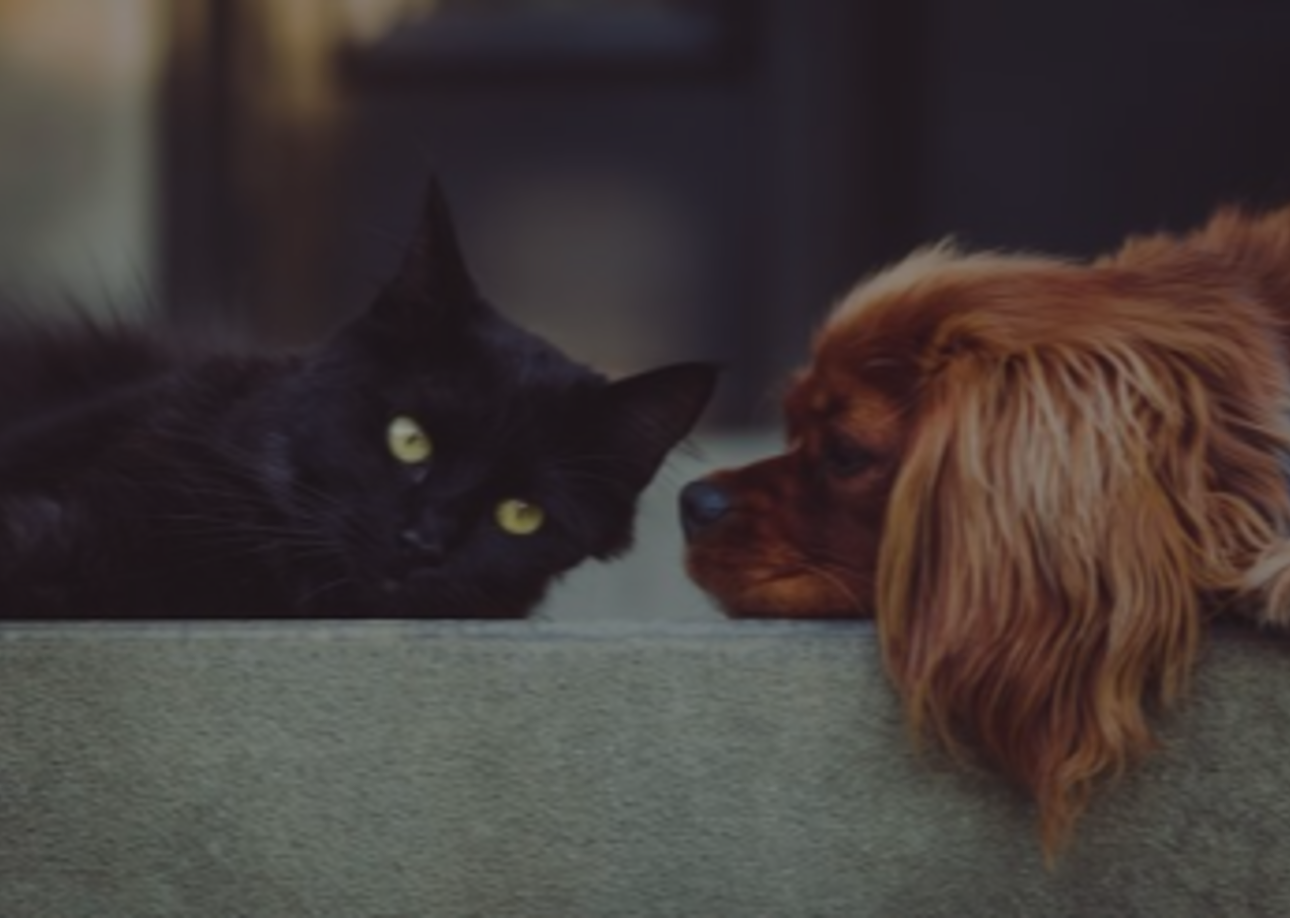 Cover Your Tracks: Concealing Pet Ownership When Staging Your Home
