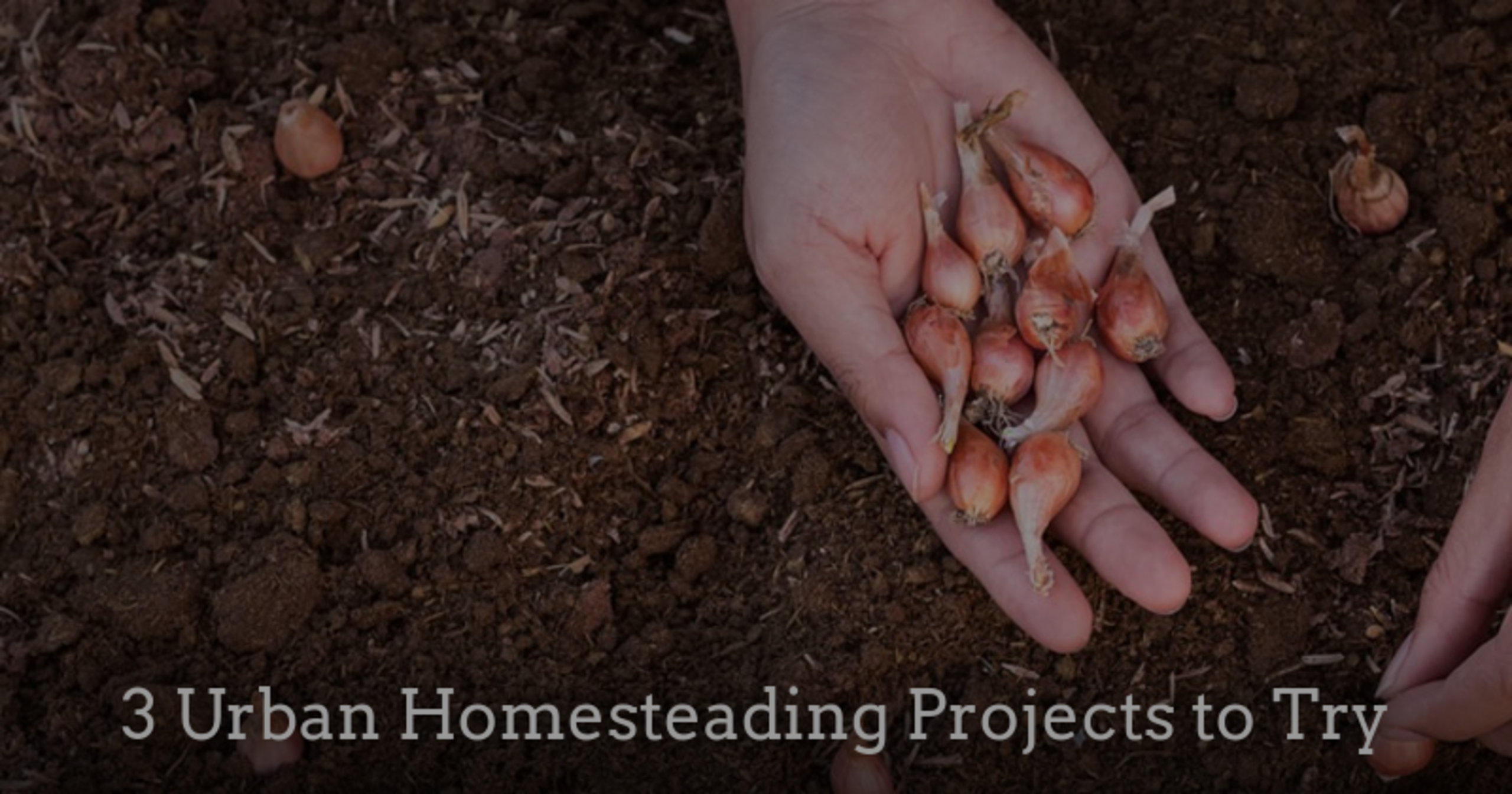3 Urban Homesteading Projects to Try