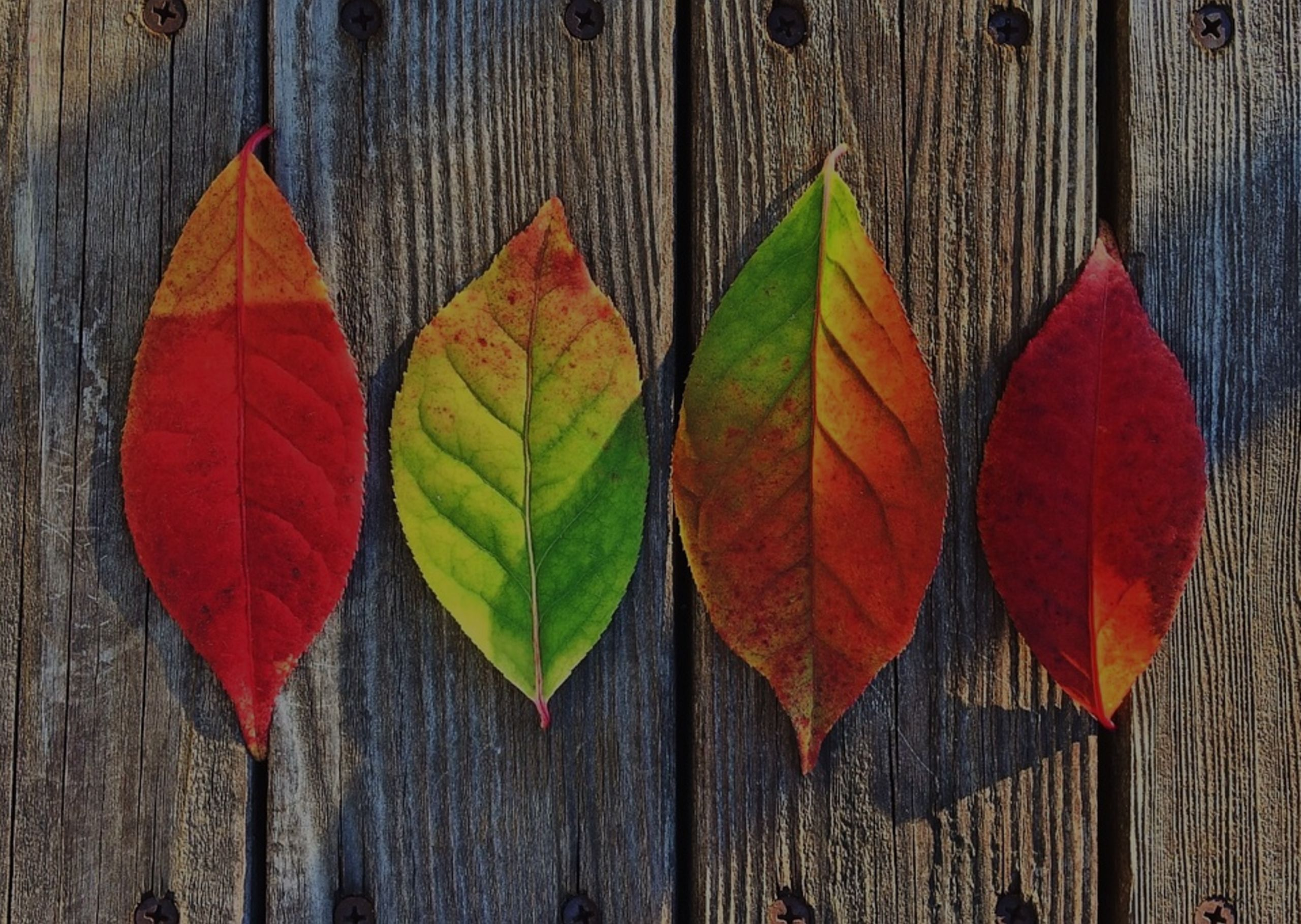 5 Ways to Get Back Into the Groove of Fall