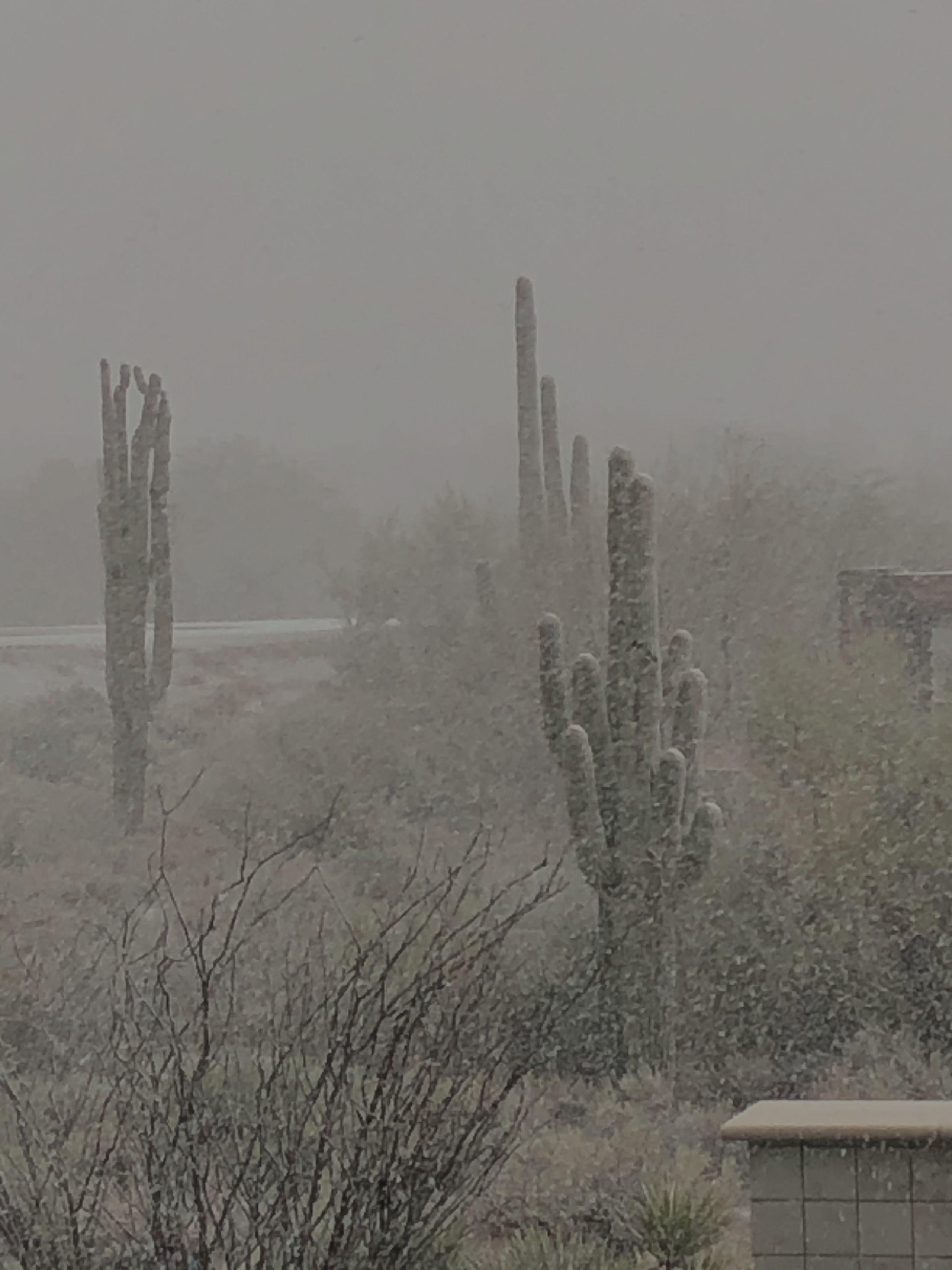 Snow in the Sonoran Desert