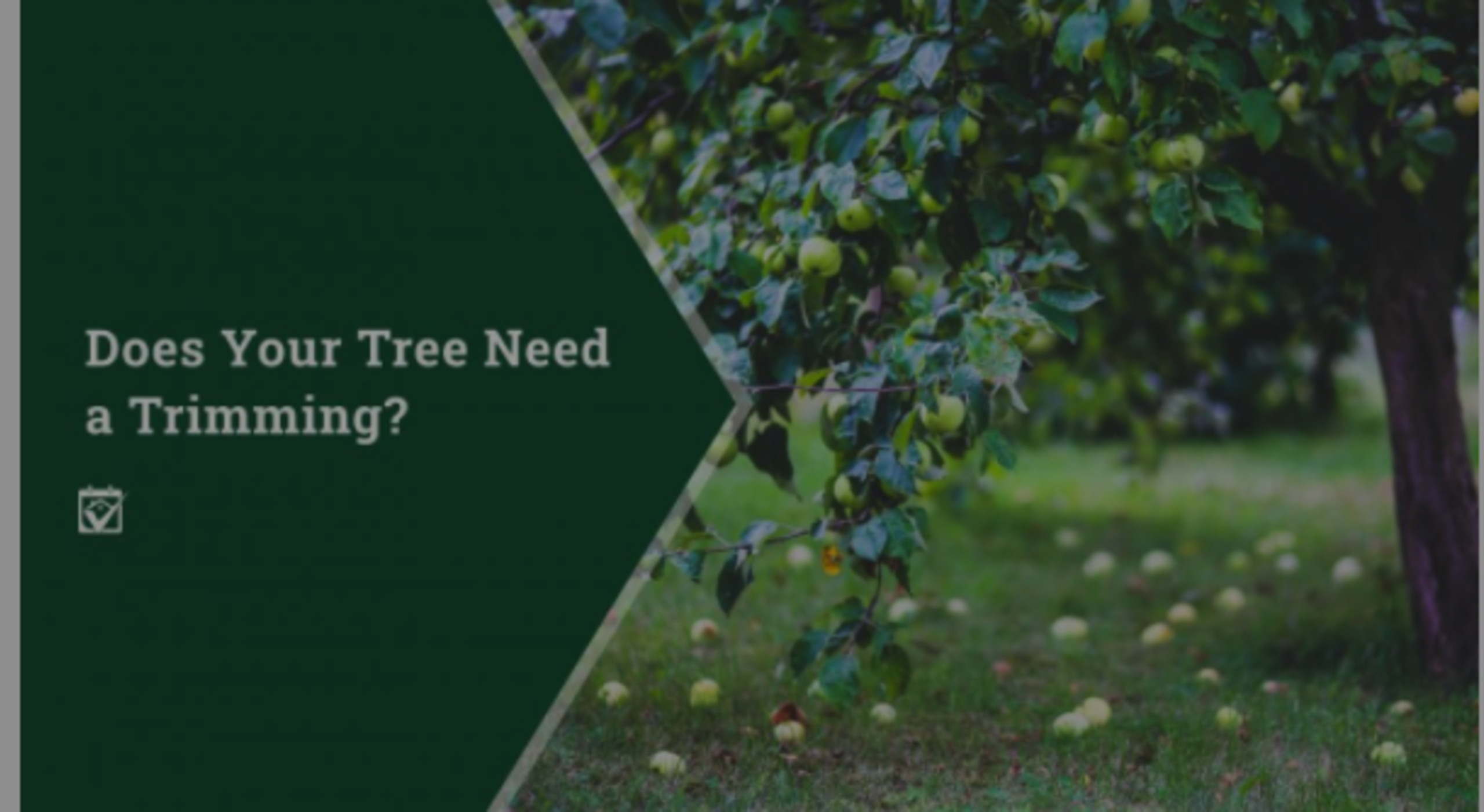 Does Your Tree Need a Trimming?