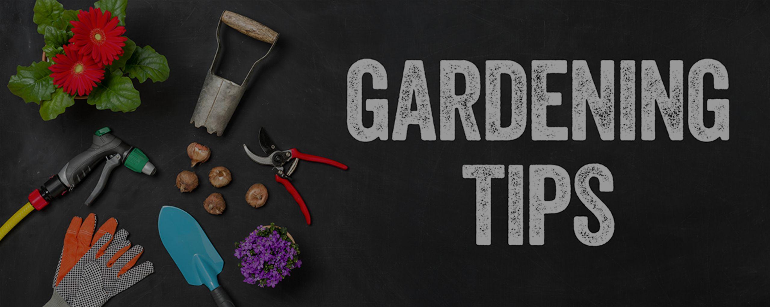 FYI: Top Ten Gardening Tips for Beginners