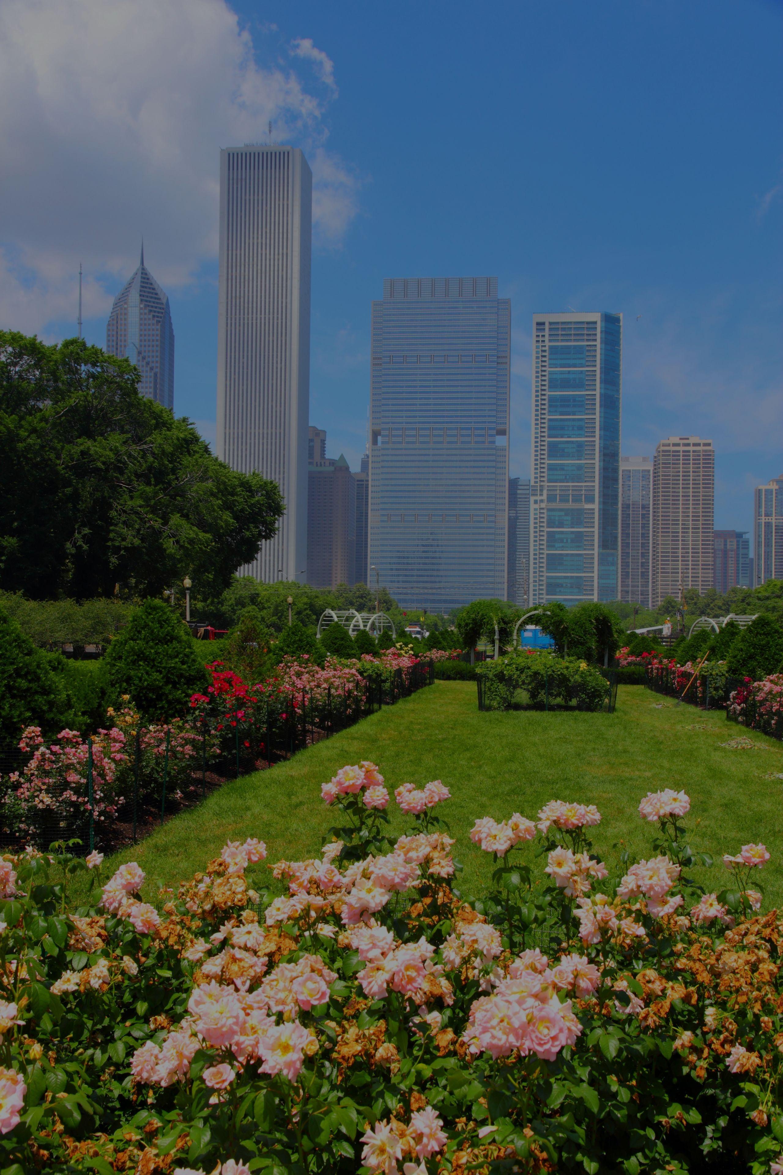 Best Dog Friendly Restaurants / Bars in Chicago