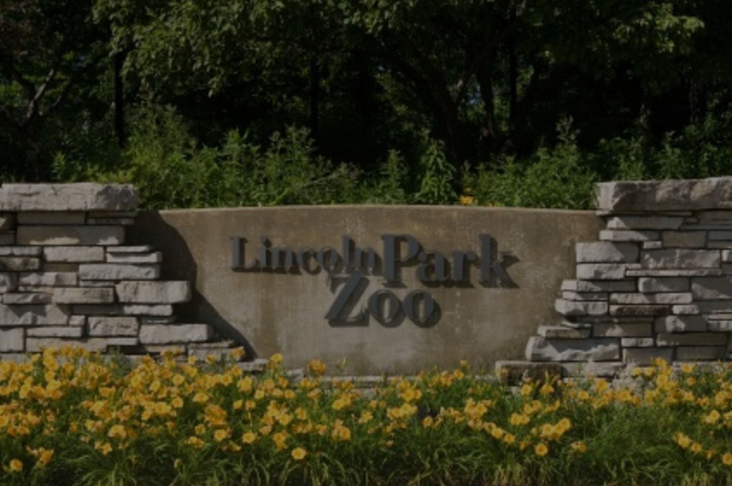 The Famous Lincoln Park Zoo