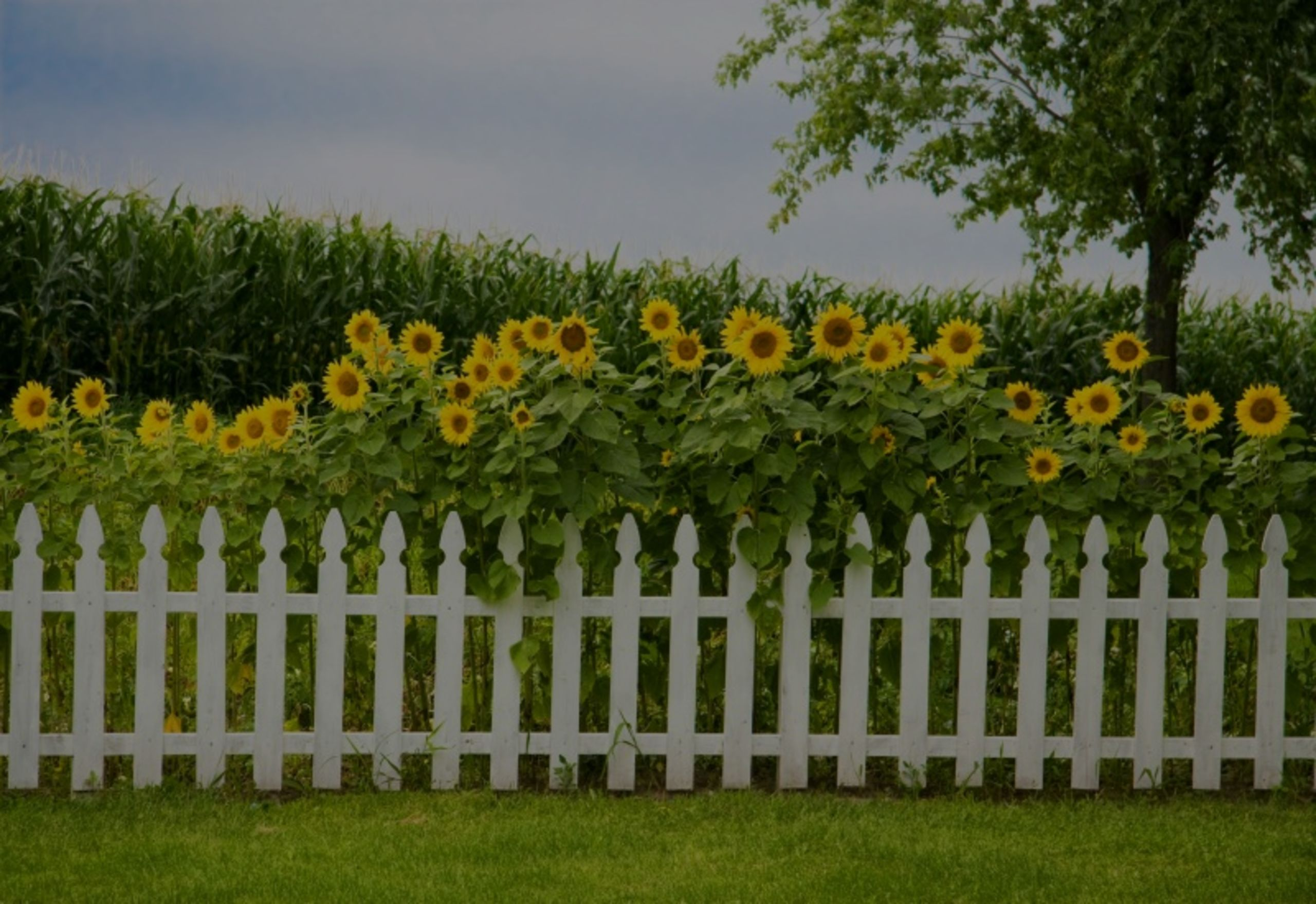 Quintessentally American – The White Picket Fence