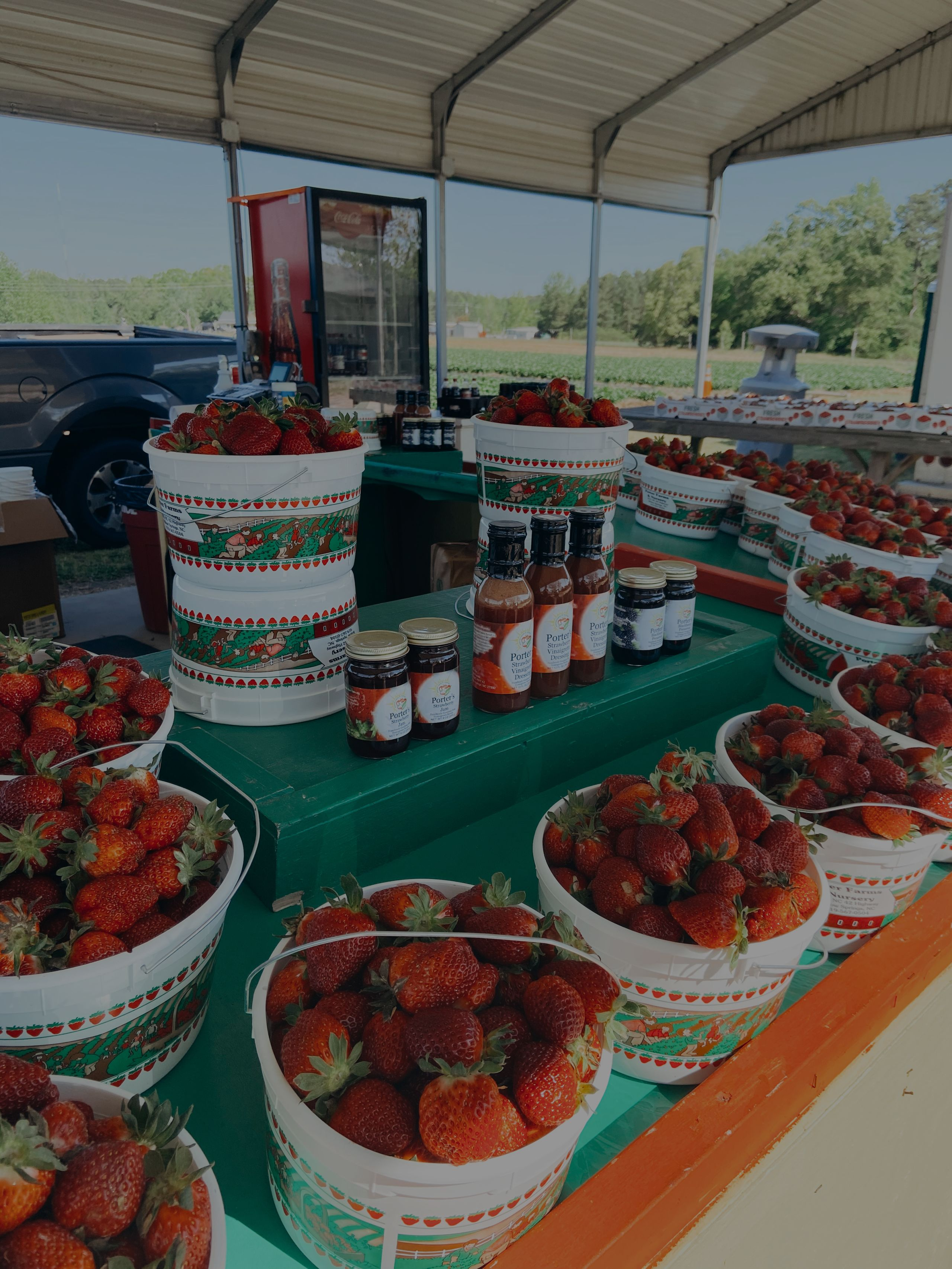 Strawberry Picking at Porter Farms