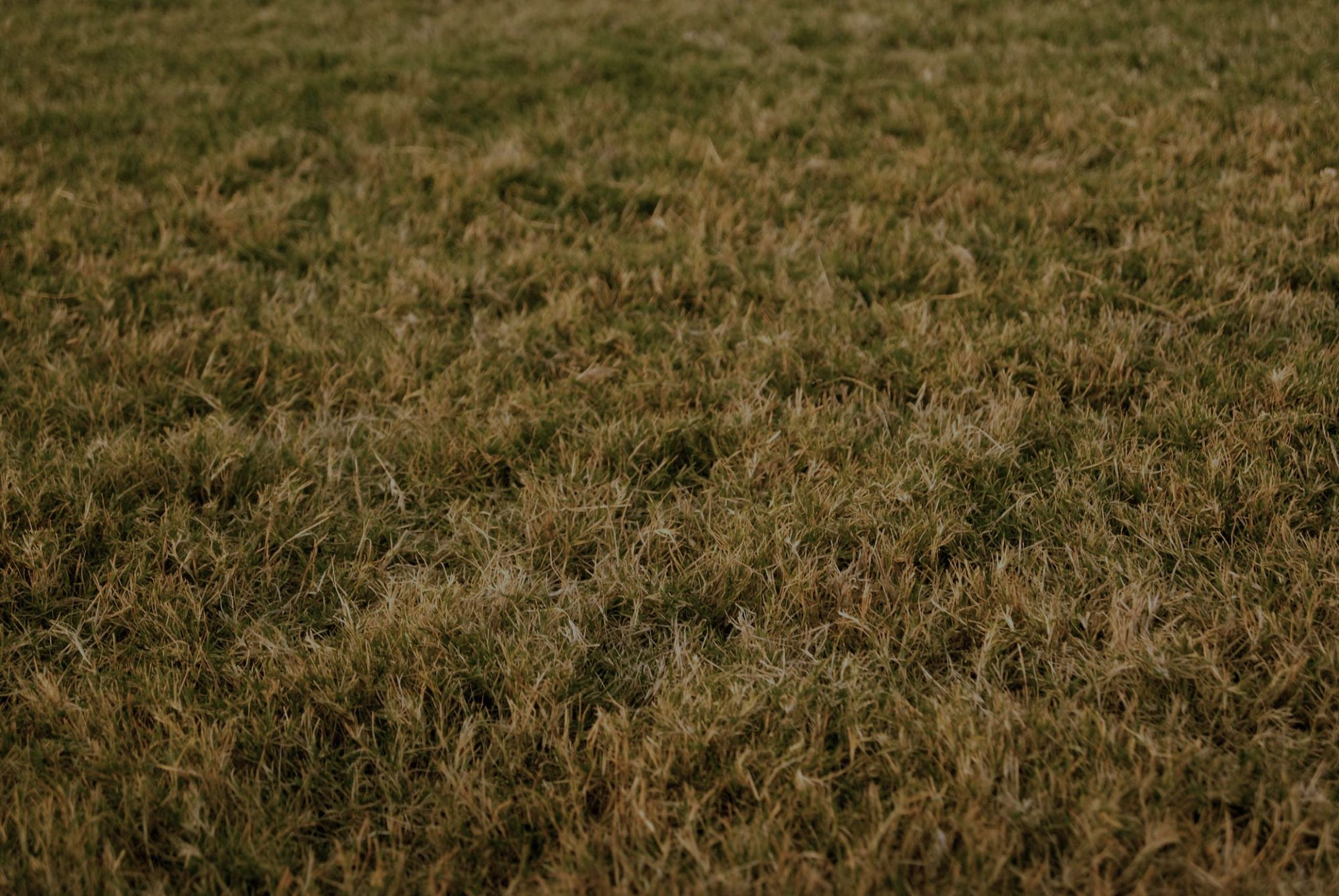 Stop Killing Your Grass