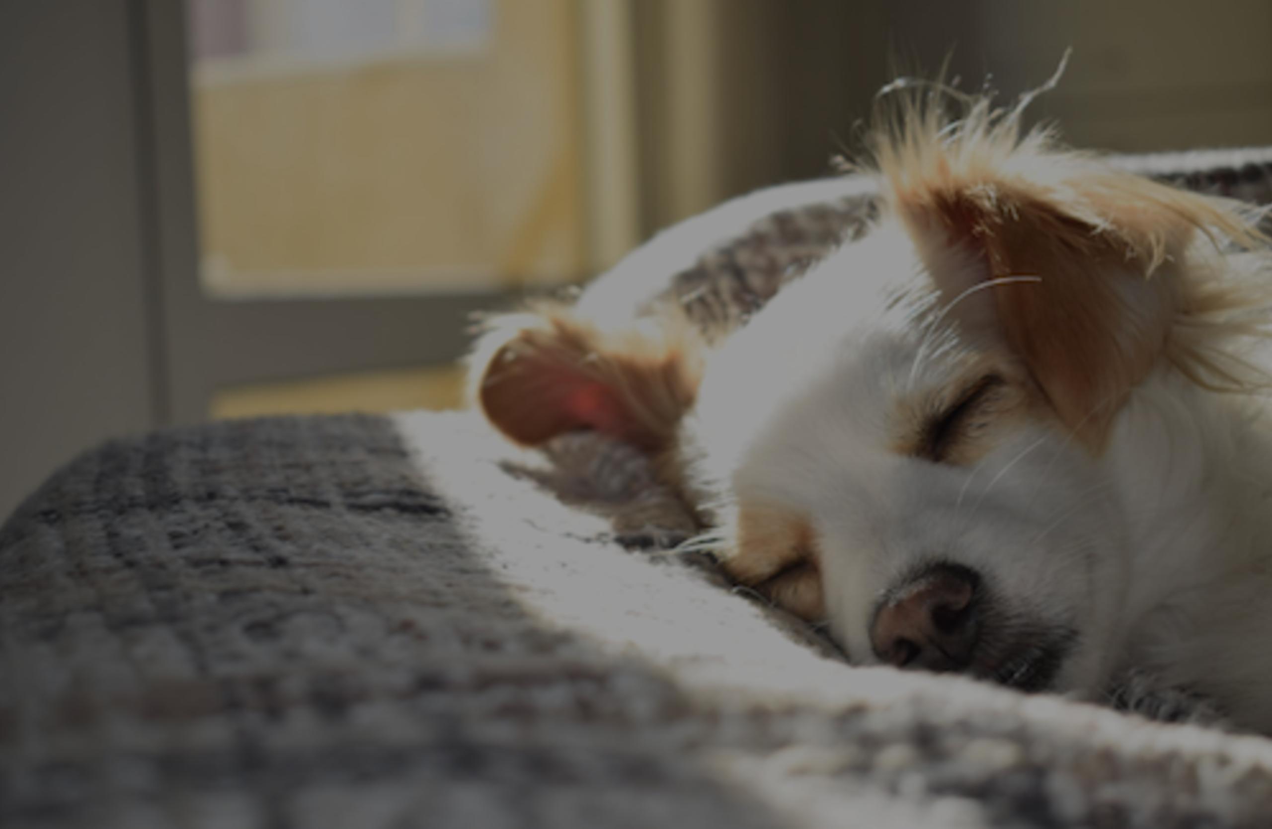 12 Pet Owner Maintenance Musts