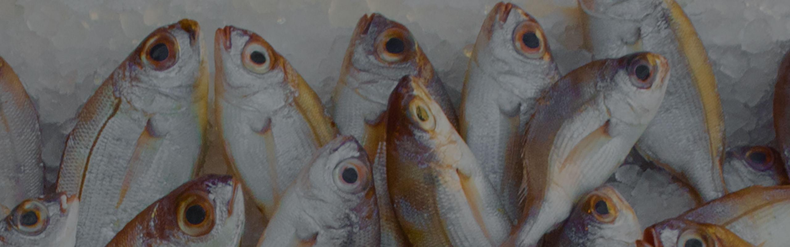 FREE Download- Florida Saltwater Fishing Regulations!
