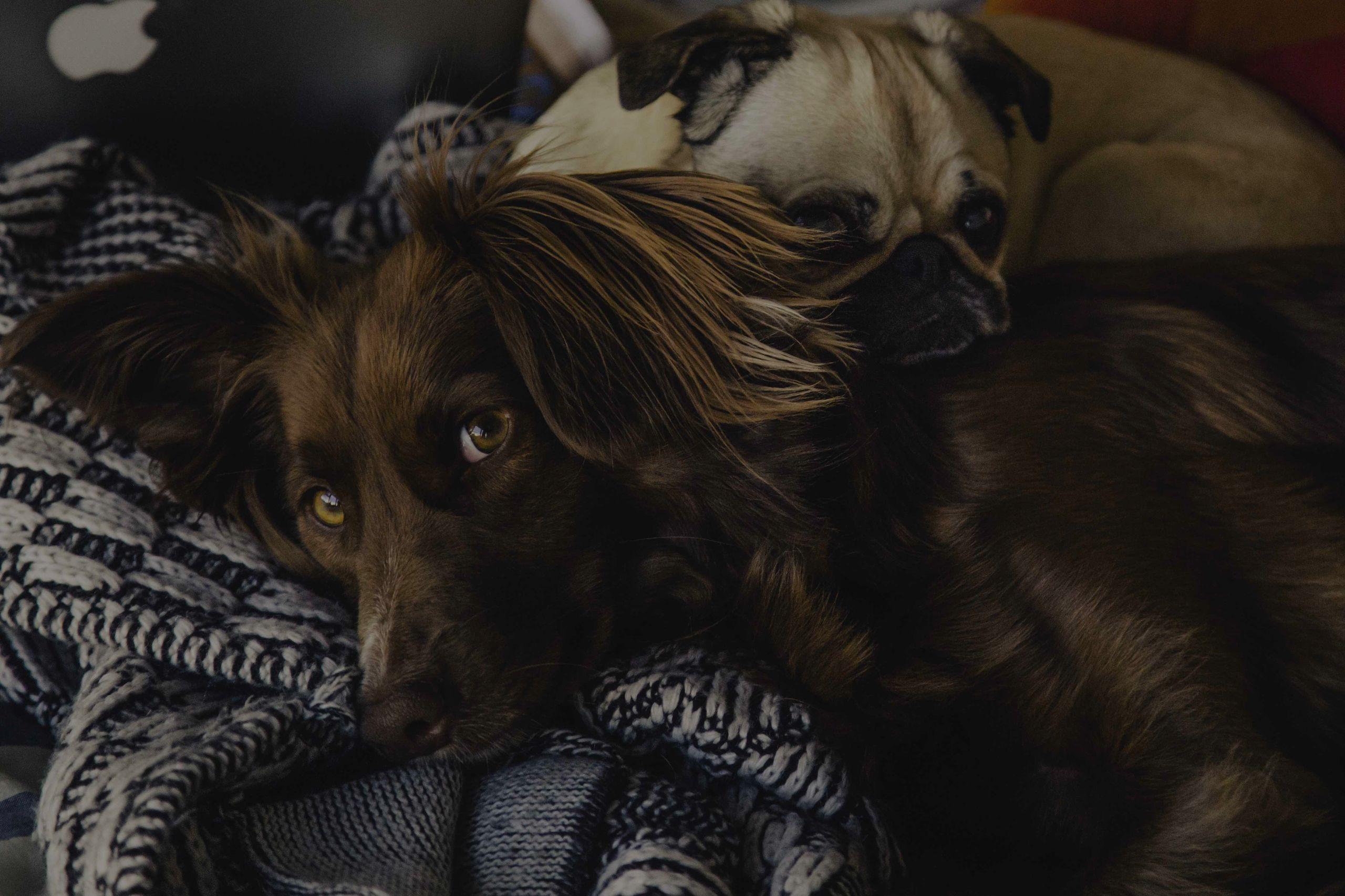 Create an Evacuation Plan for Pets