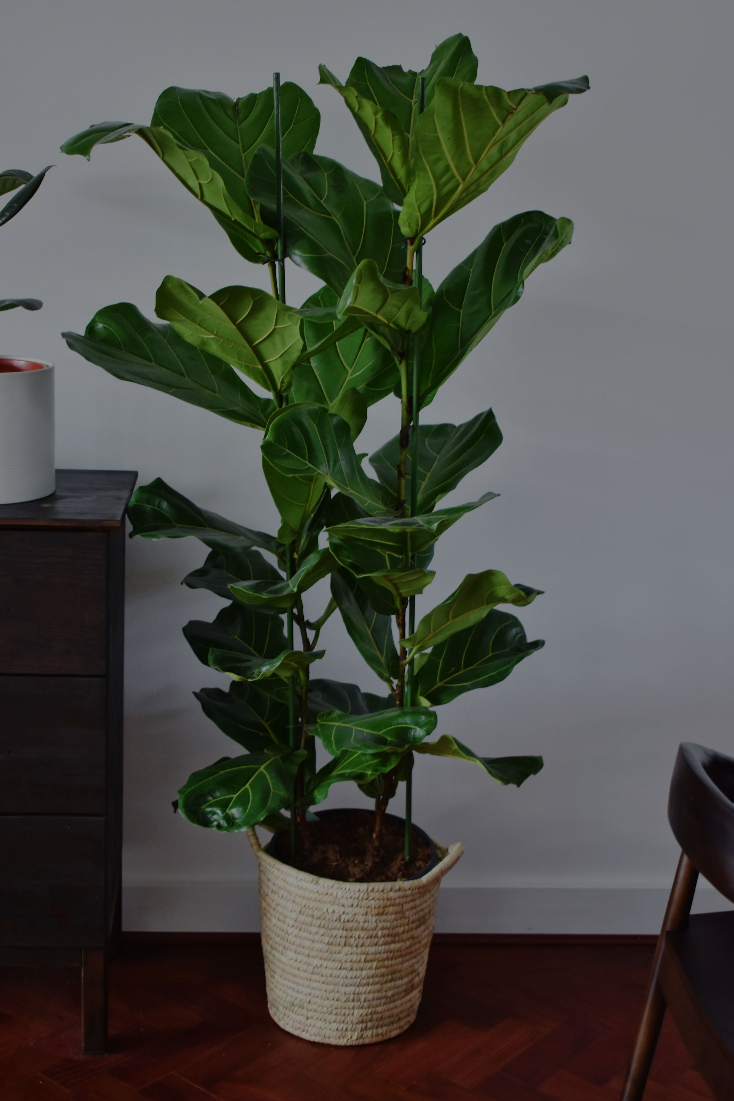 How Real Plants Affect Daily Life and Why Your Home Needs Them