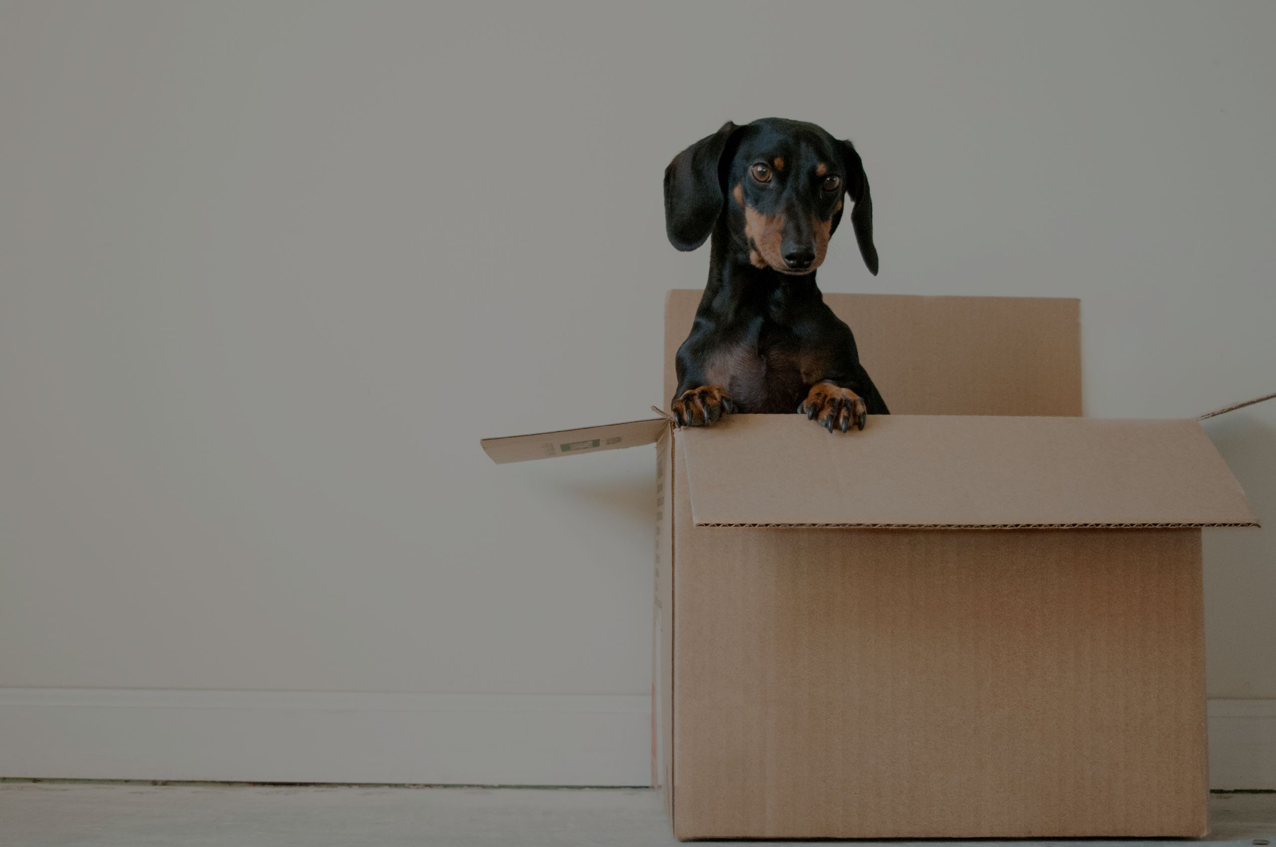Key Steps for a Painless Move
