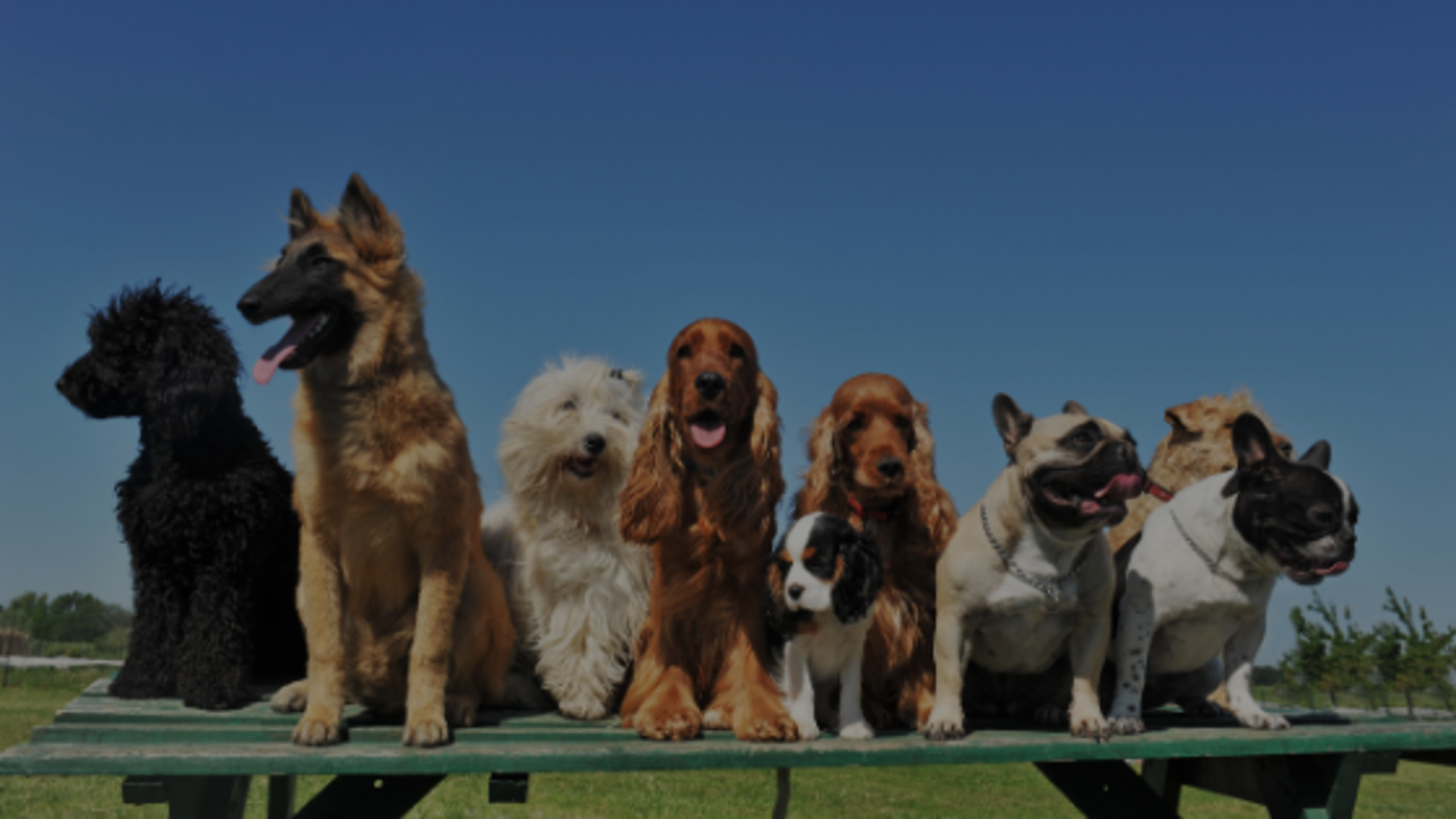 Opportunity is Barking – Sell Your Dogs!