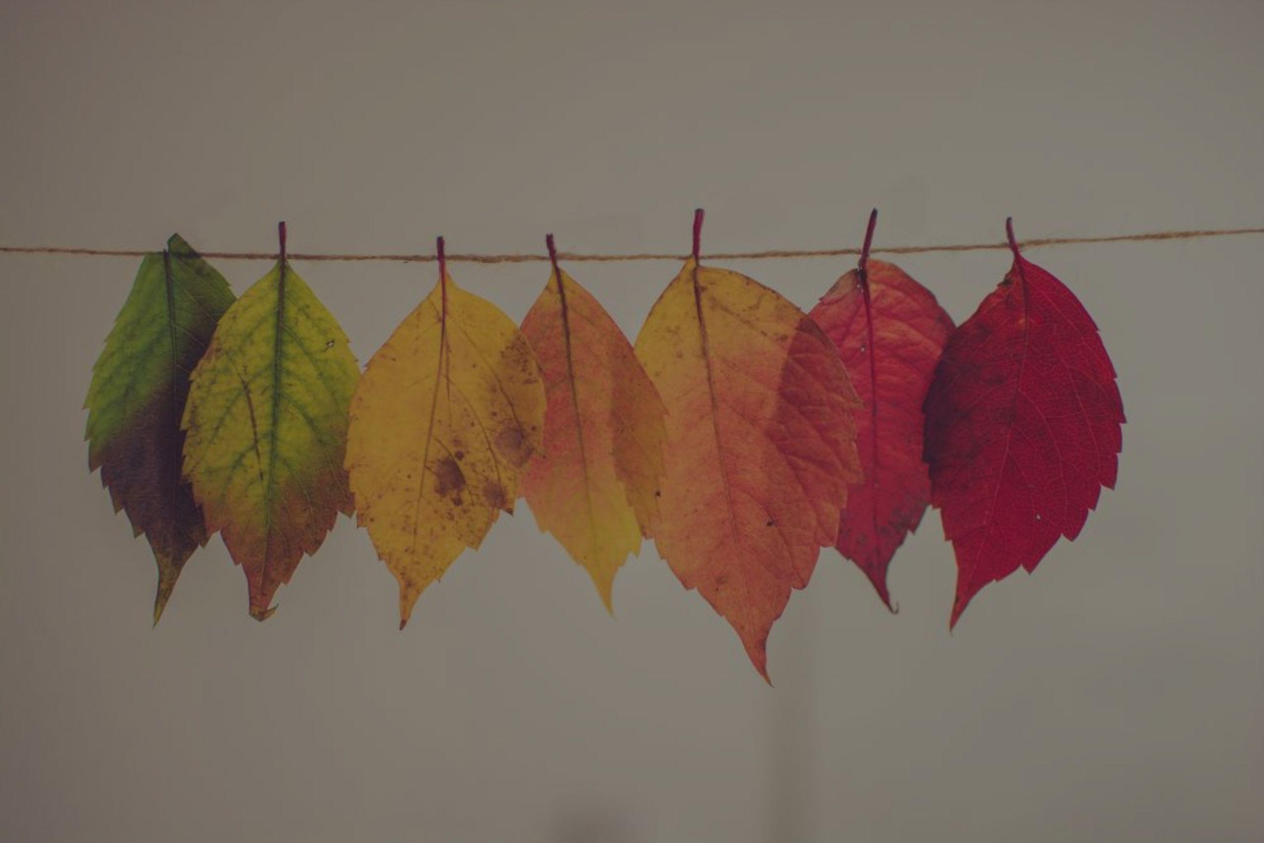 Fall Updates in La Verne, Rancho Cucamonga, Glendora, Azusa and more!