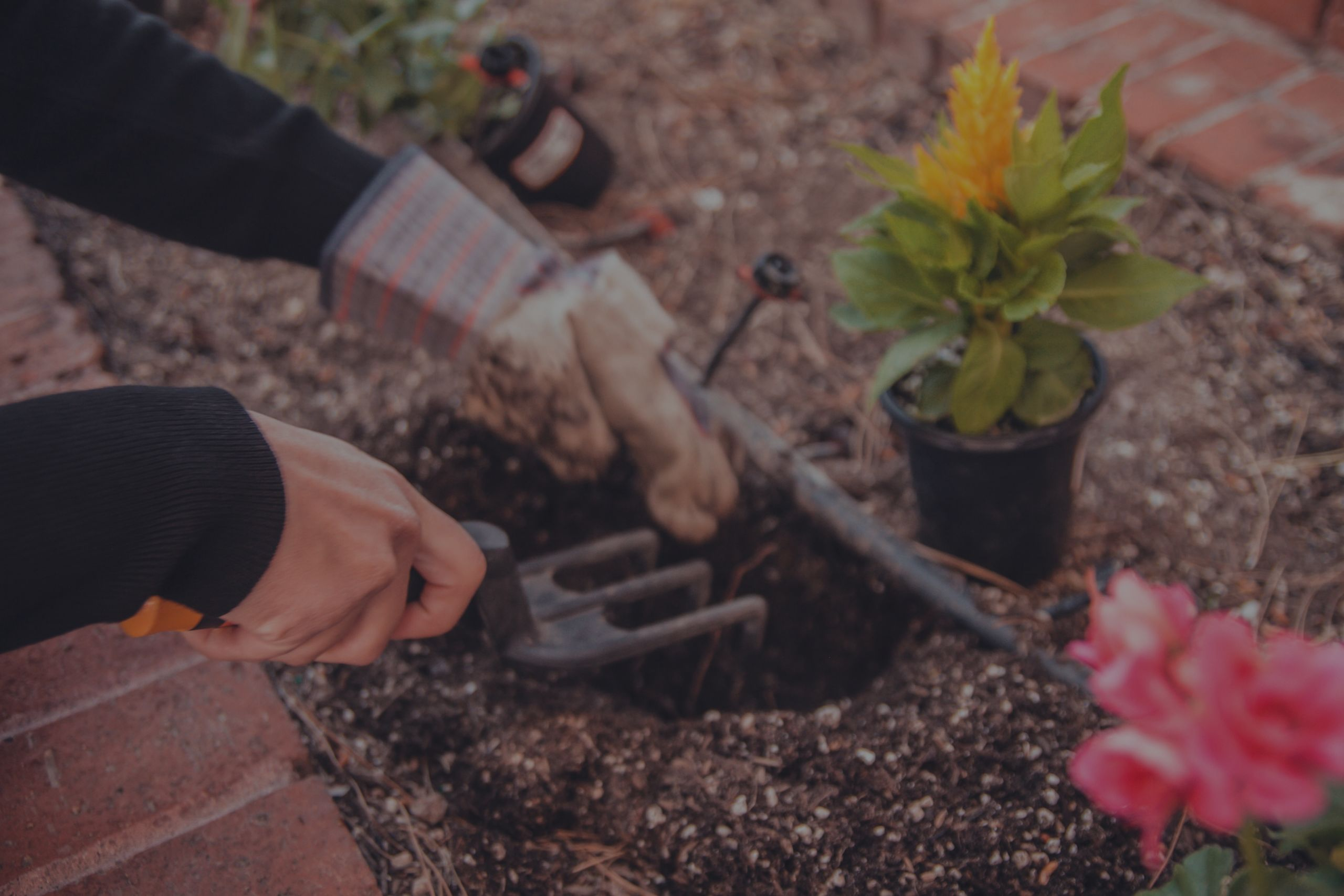 6 Summer Gardening Tips & Real Estate Stats