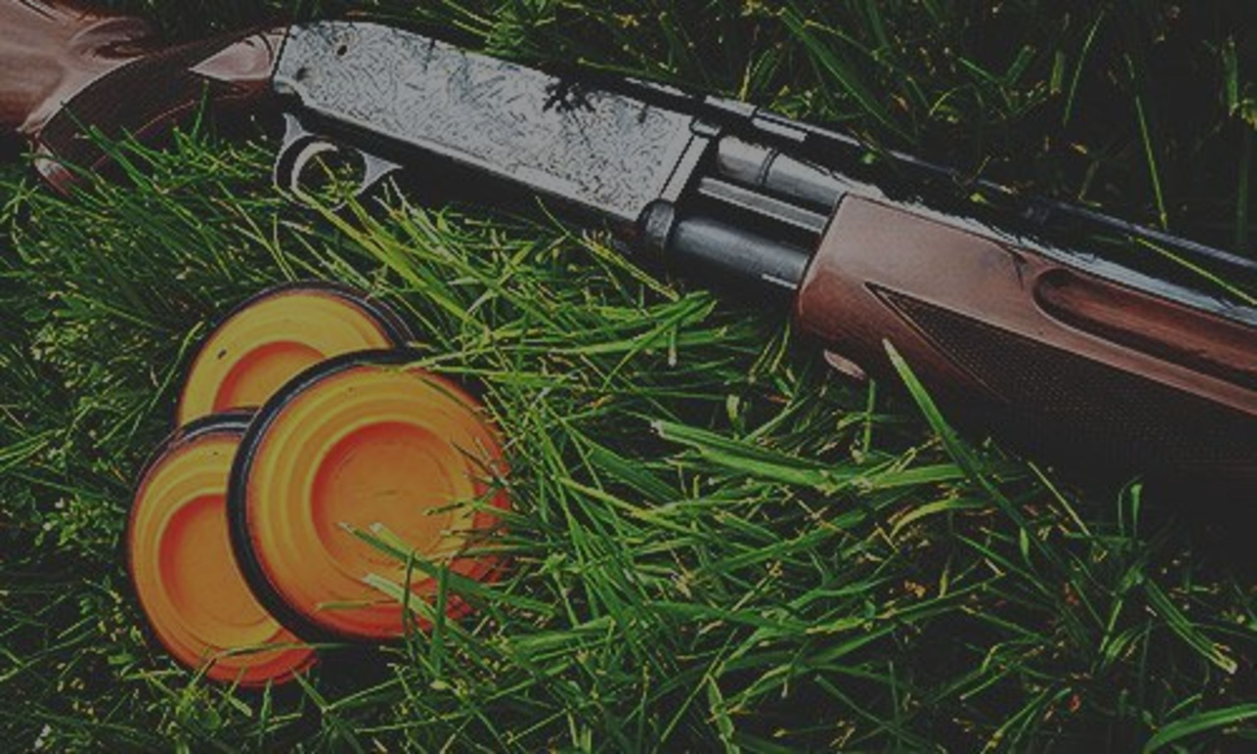 Beginner's Guide to Shooting Clay Pigeon