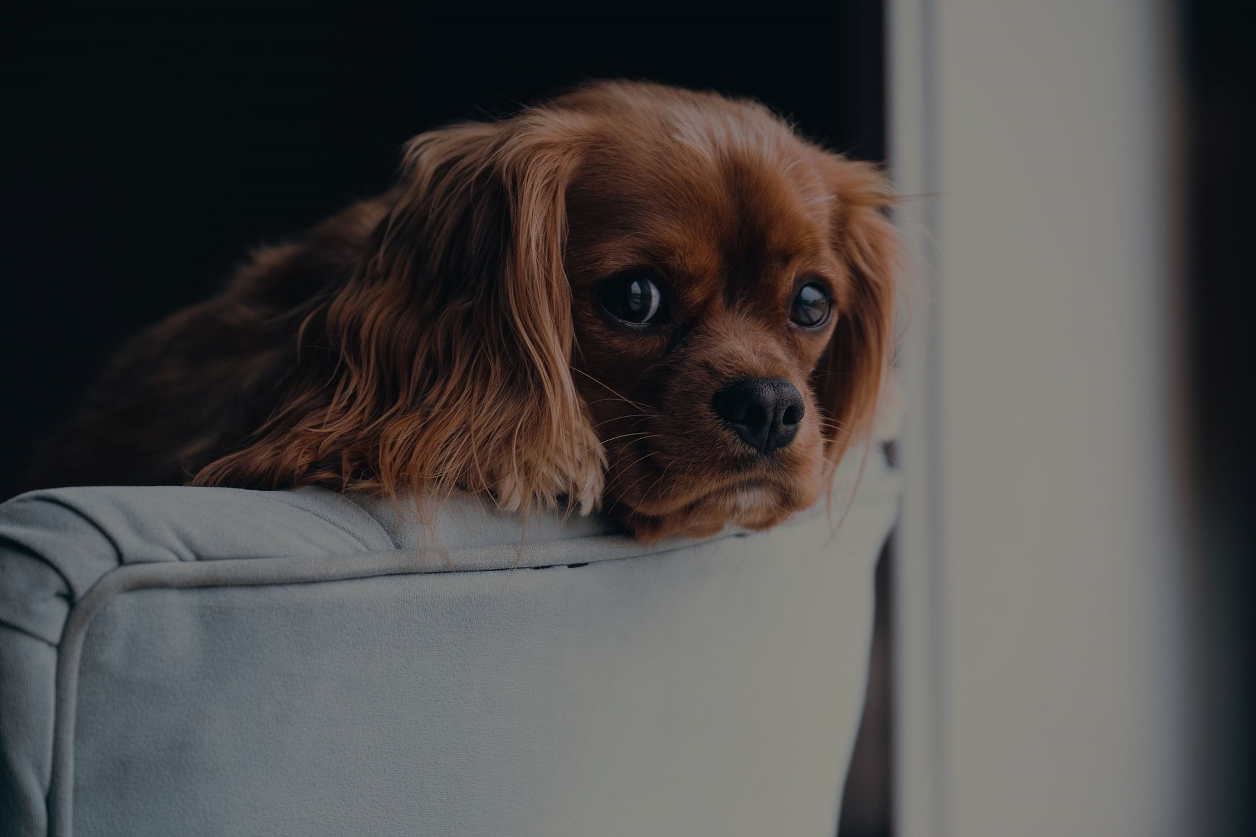 Staging Your Home with Fido: Five Easy Tips for Pet Owners Selling a Home