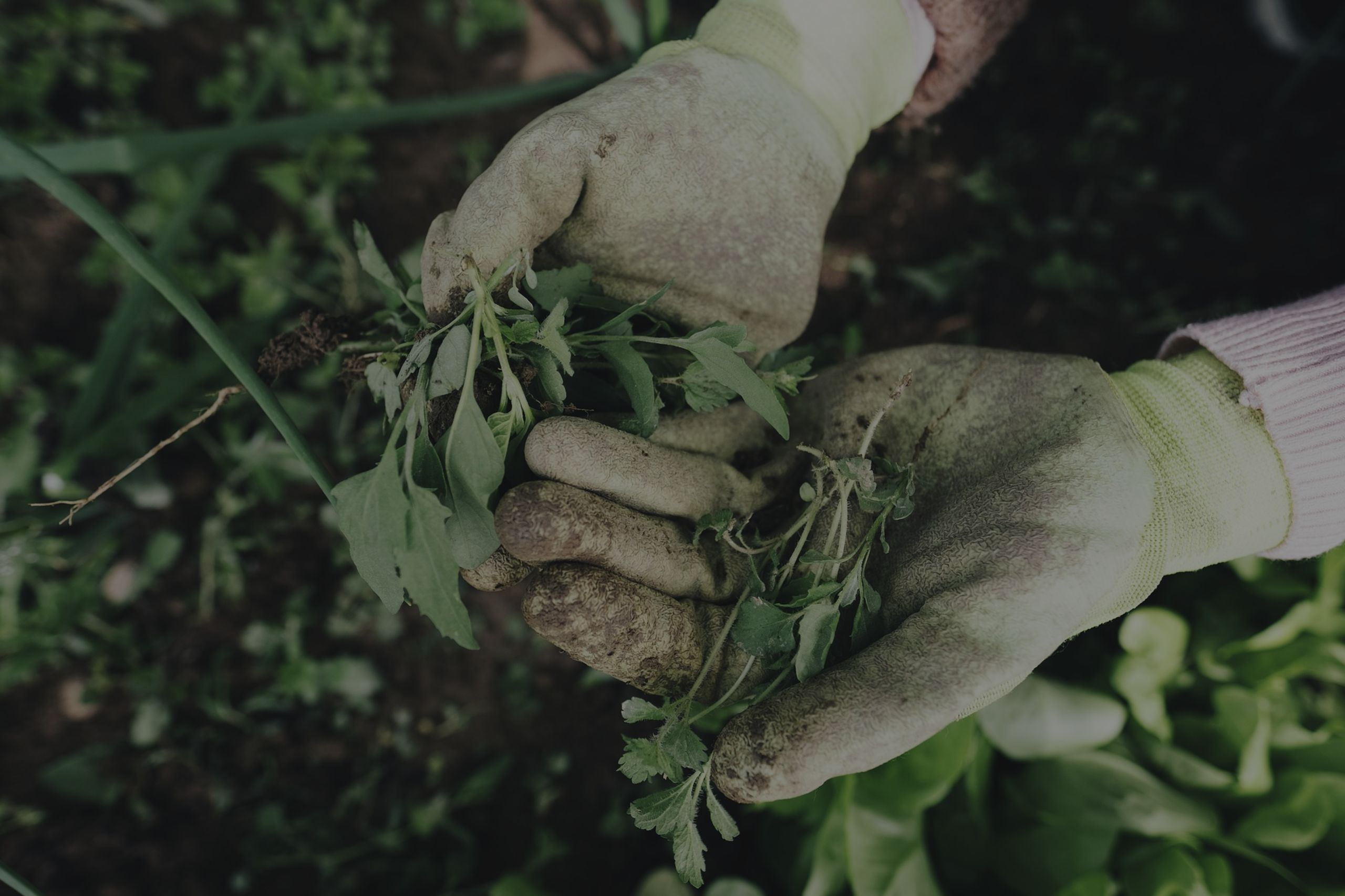 6 Tips to Keep Weeds out of Your Garden