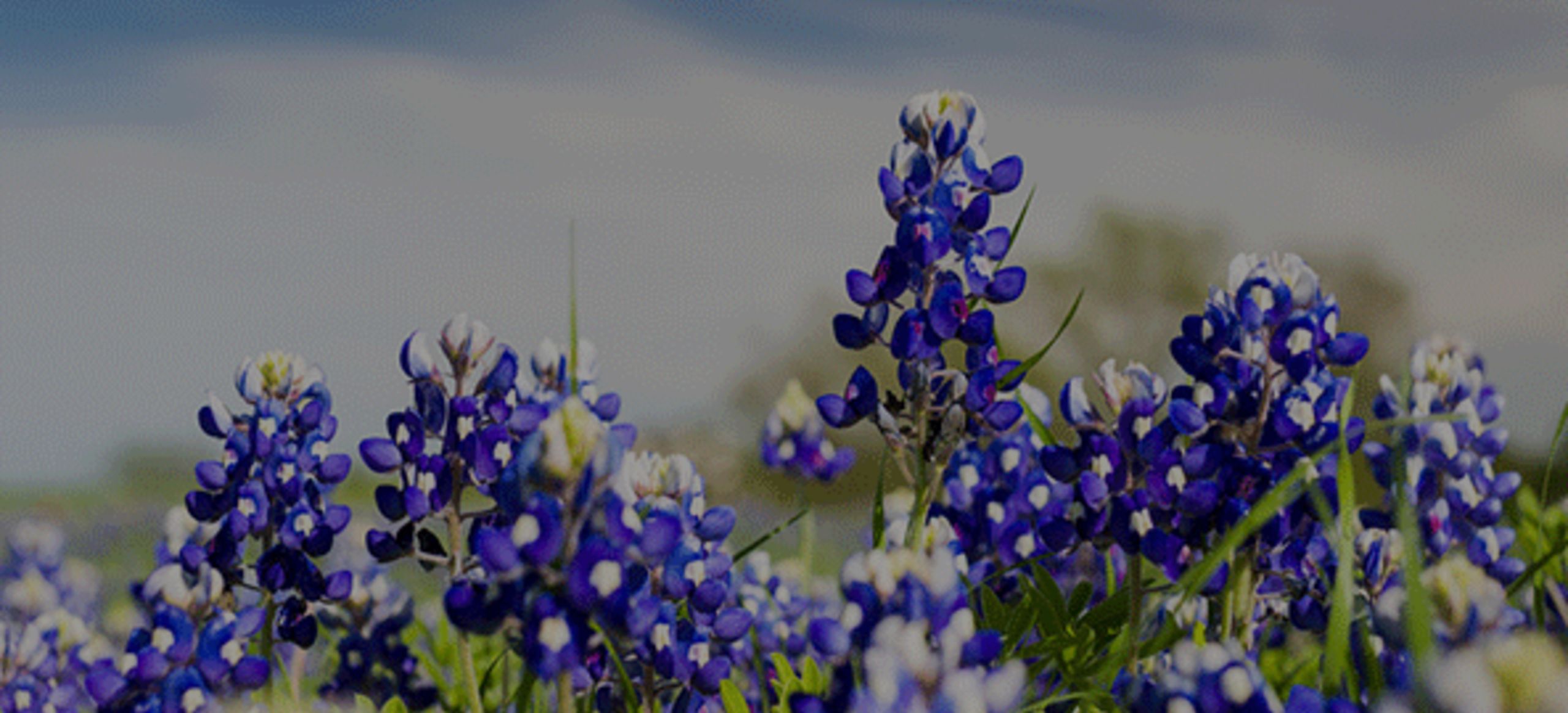 Wildflower Season in Fredericksburg & the Best Places to See Them!