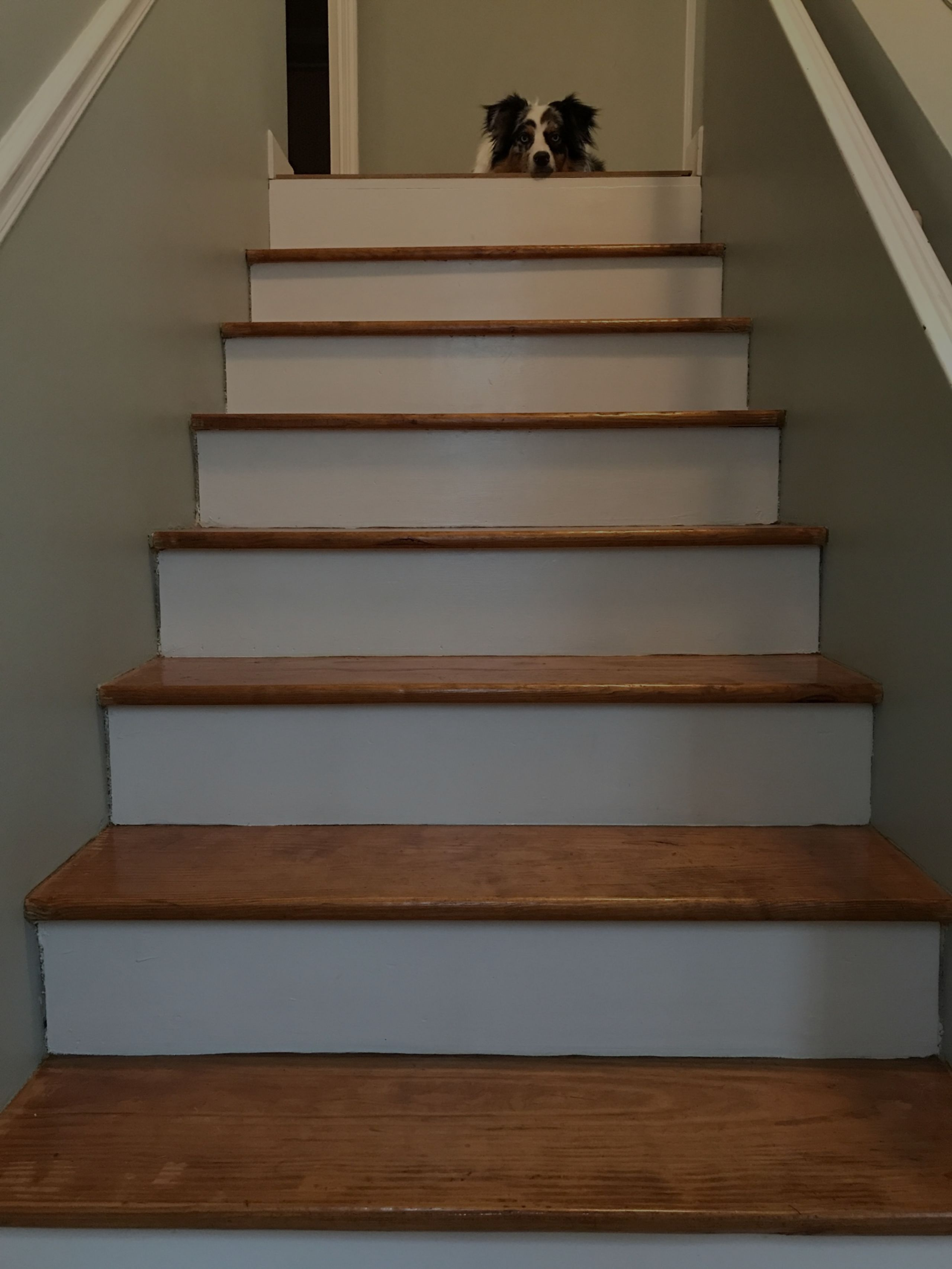 Transformation Tuesday: Carpeted Steps to Wood