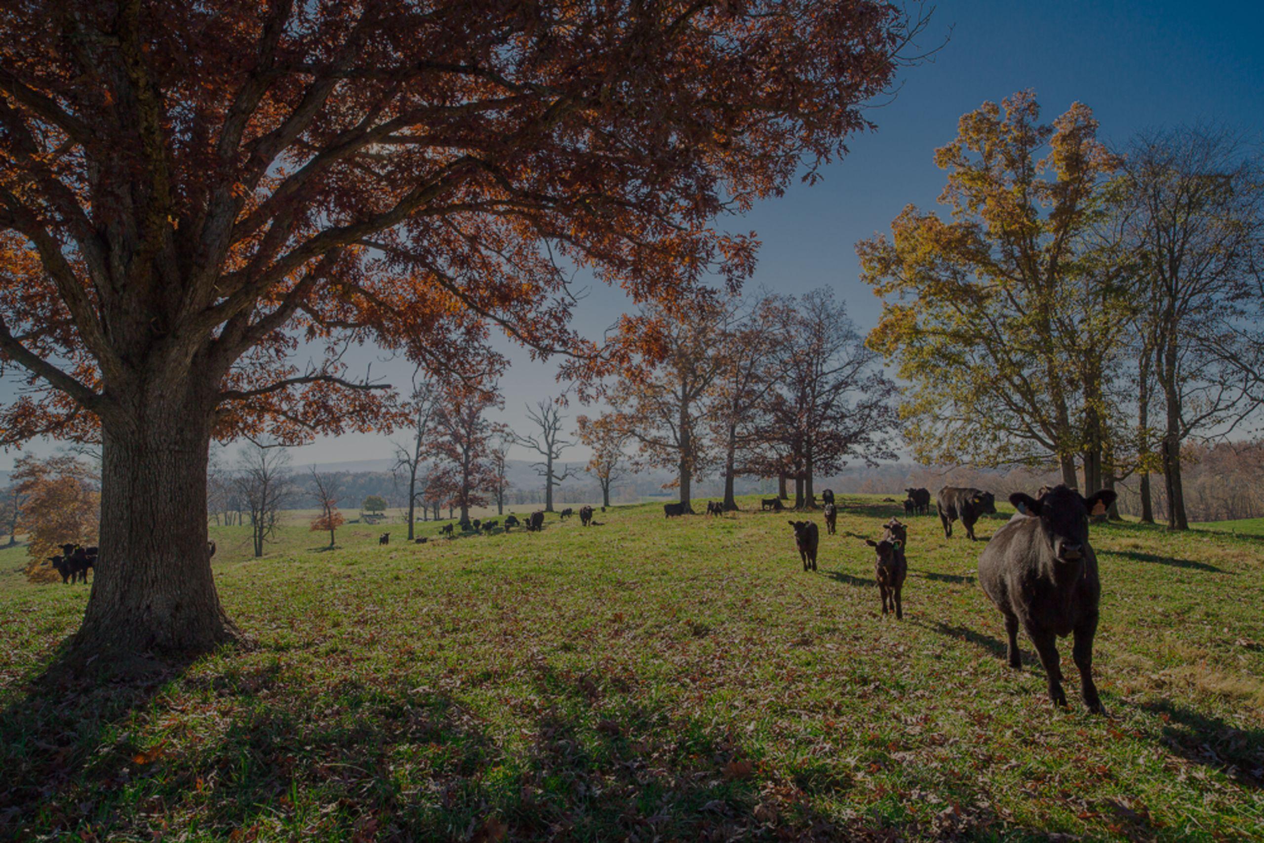 Property Tour – Ellerslie Road