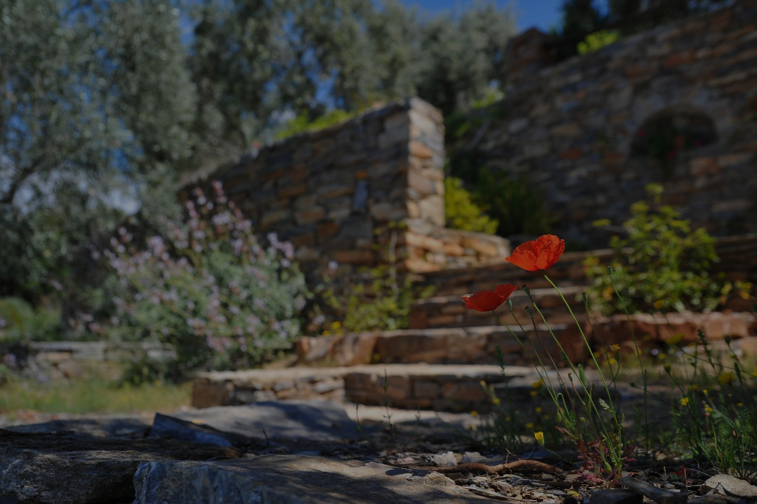 3 common landscaping mistakes