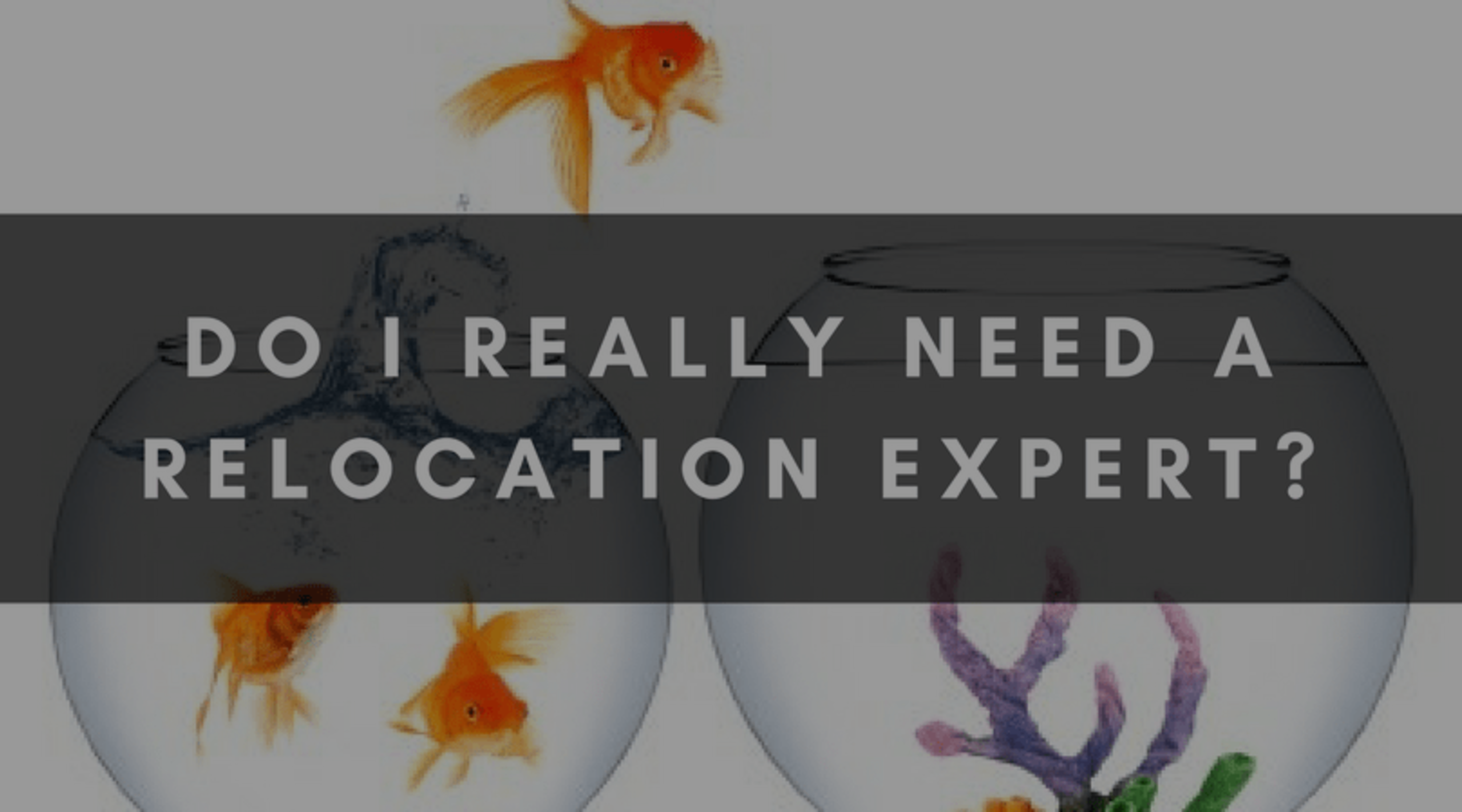 DO I REALLY NEED A RELOCATION EXPERT?