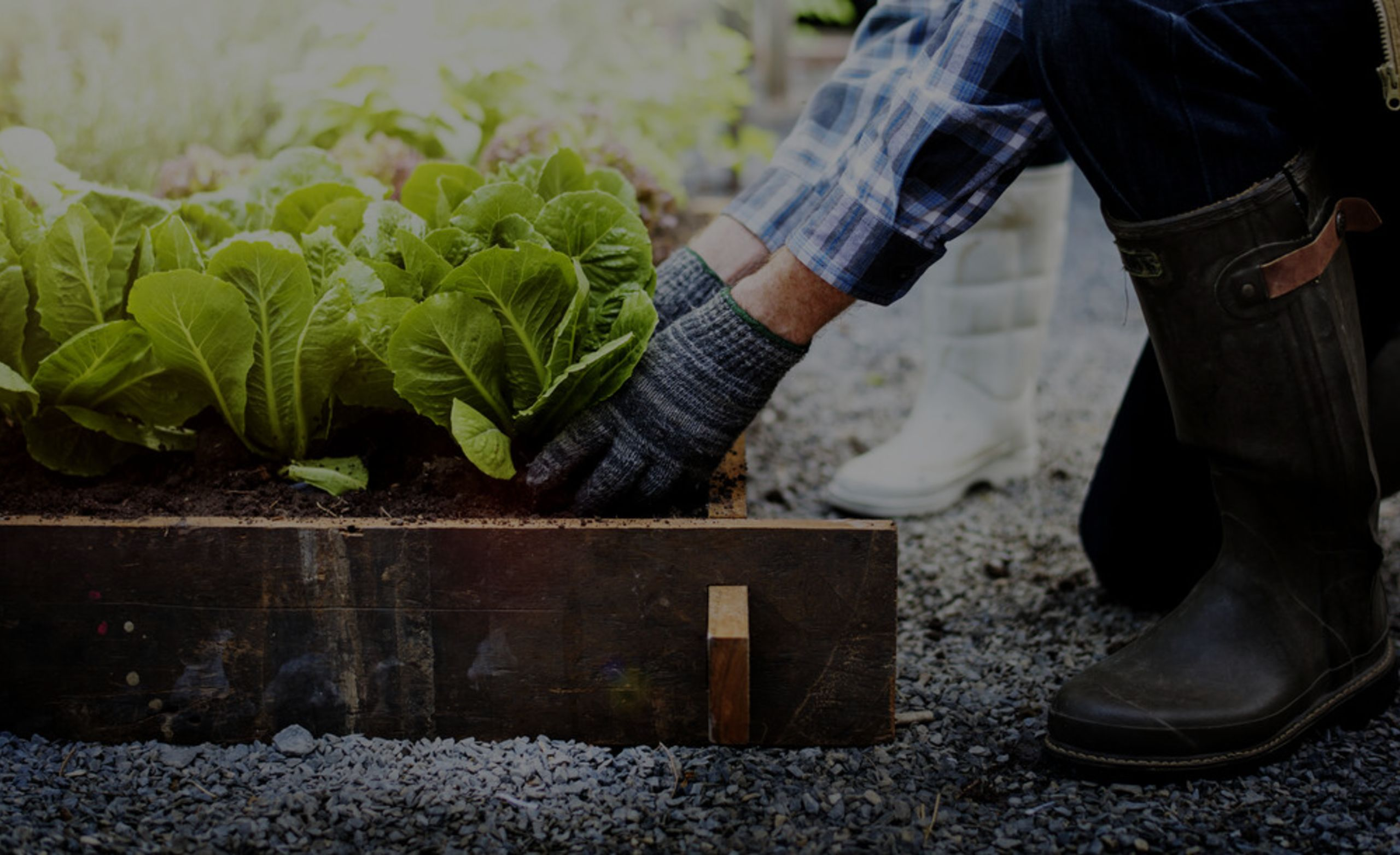 Gardening Tips to Help Your Yard + Your Stomach