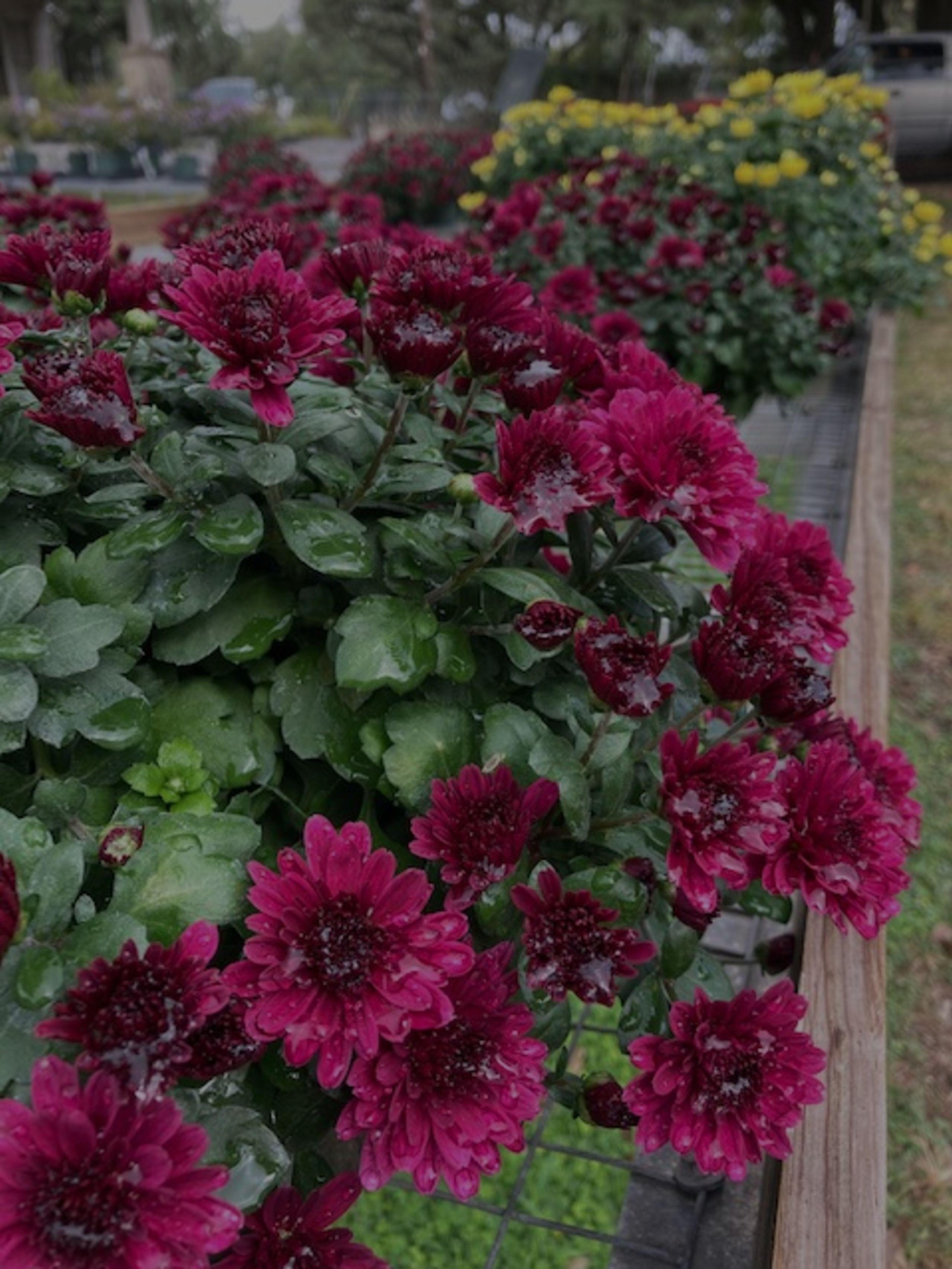Show Me Boerne:  My favorite plant nursery