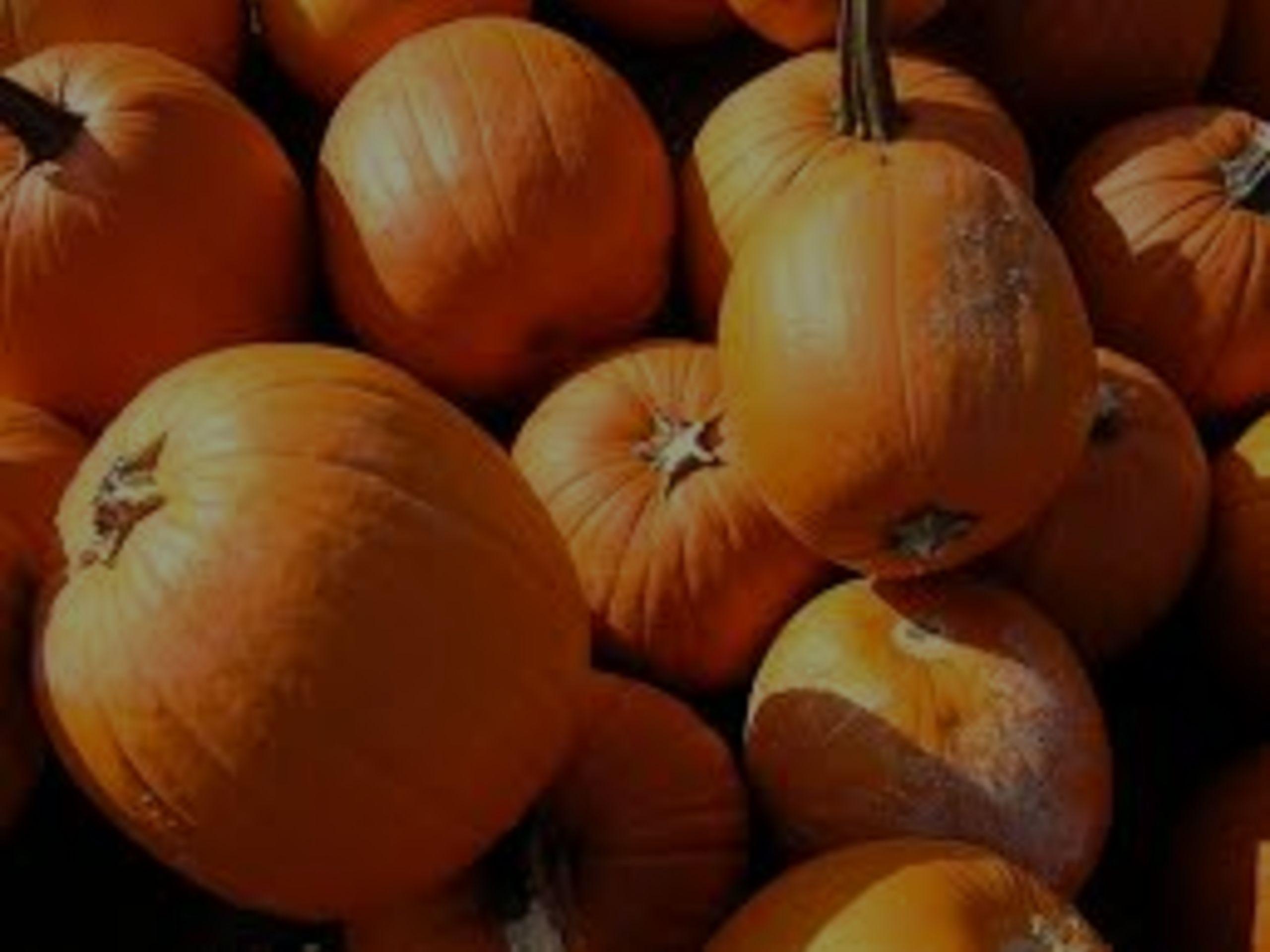 Hey Kids, Its the Great Pumpkin