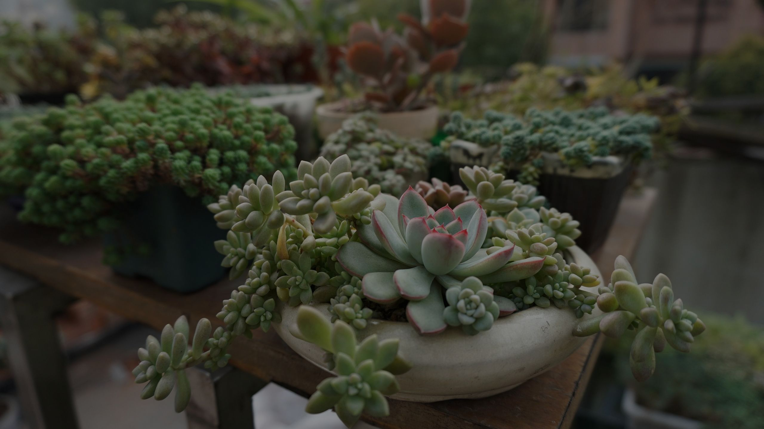 ​How to properly care for your succulents!