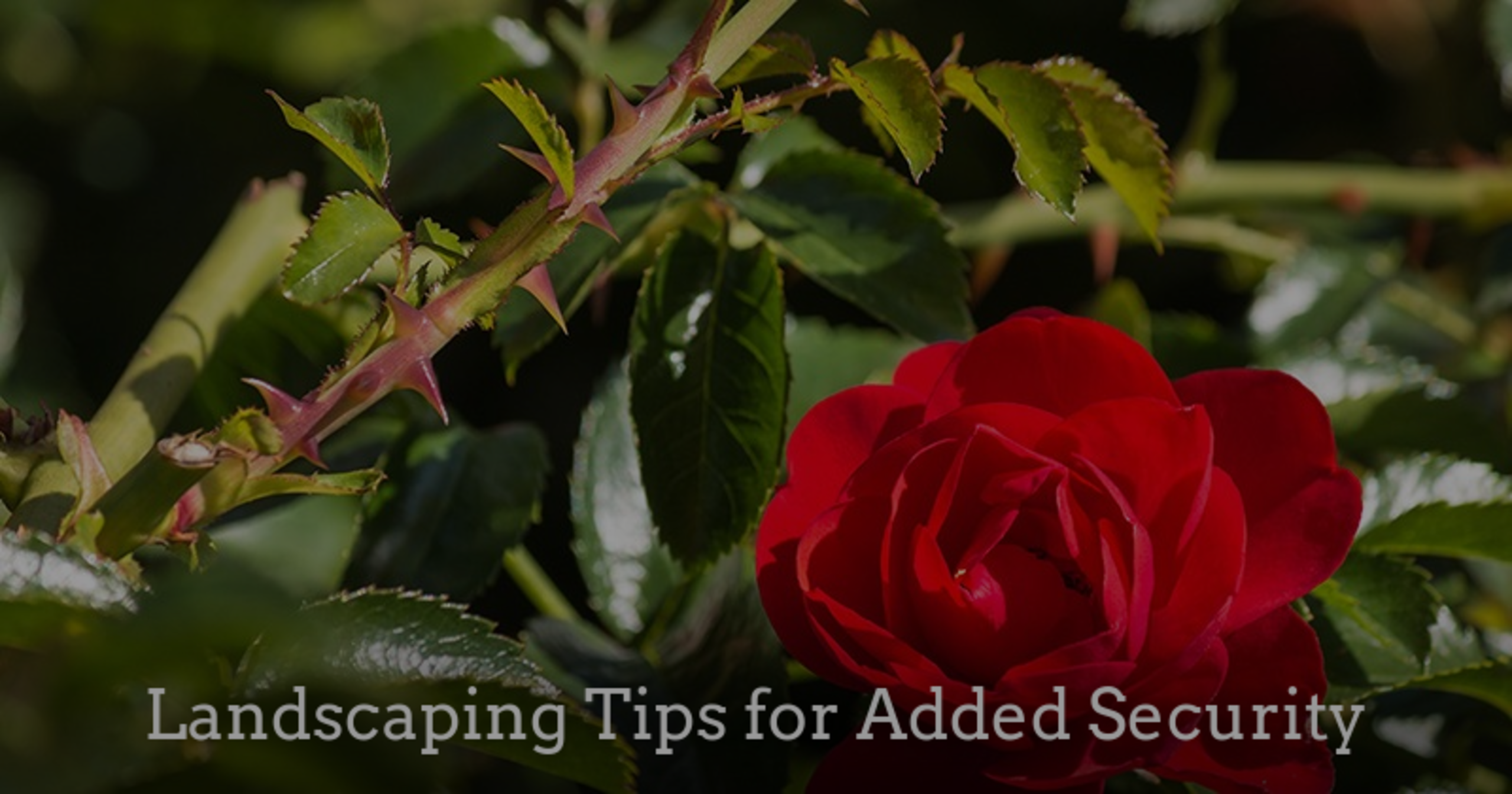 Landscaping Tips for Added Security