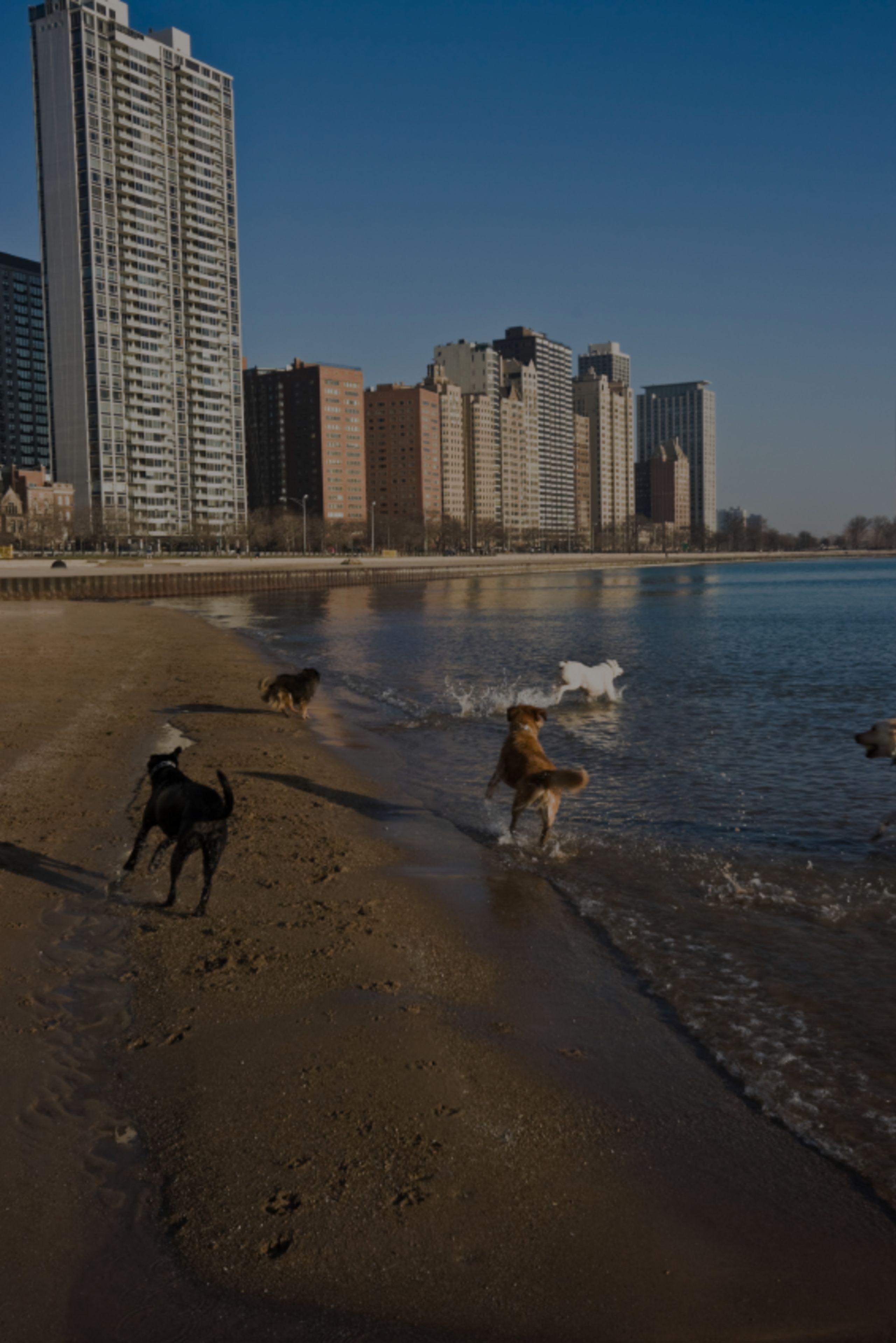 The Best Dog Parks in Chicago!!