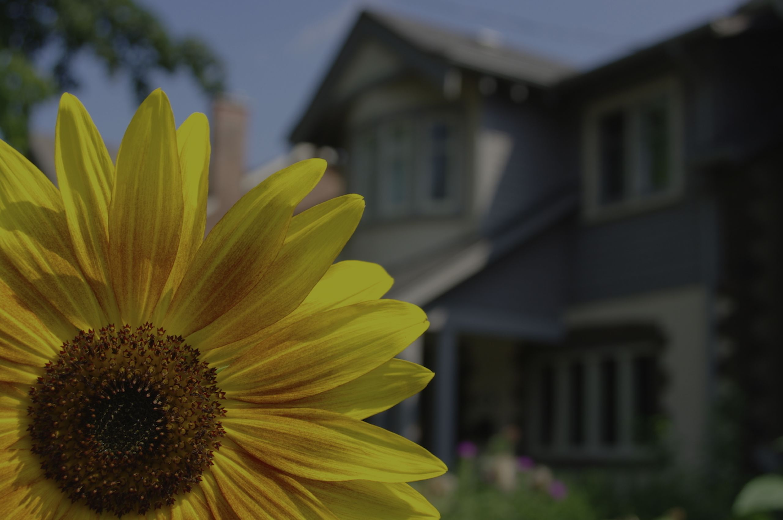 Top 5 Reasons Why Spring is the Best Time to Sell
