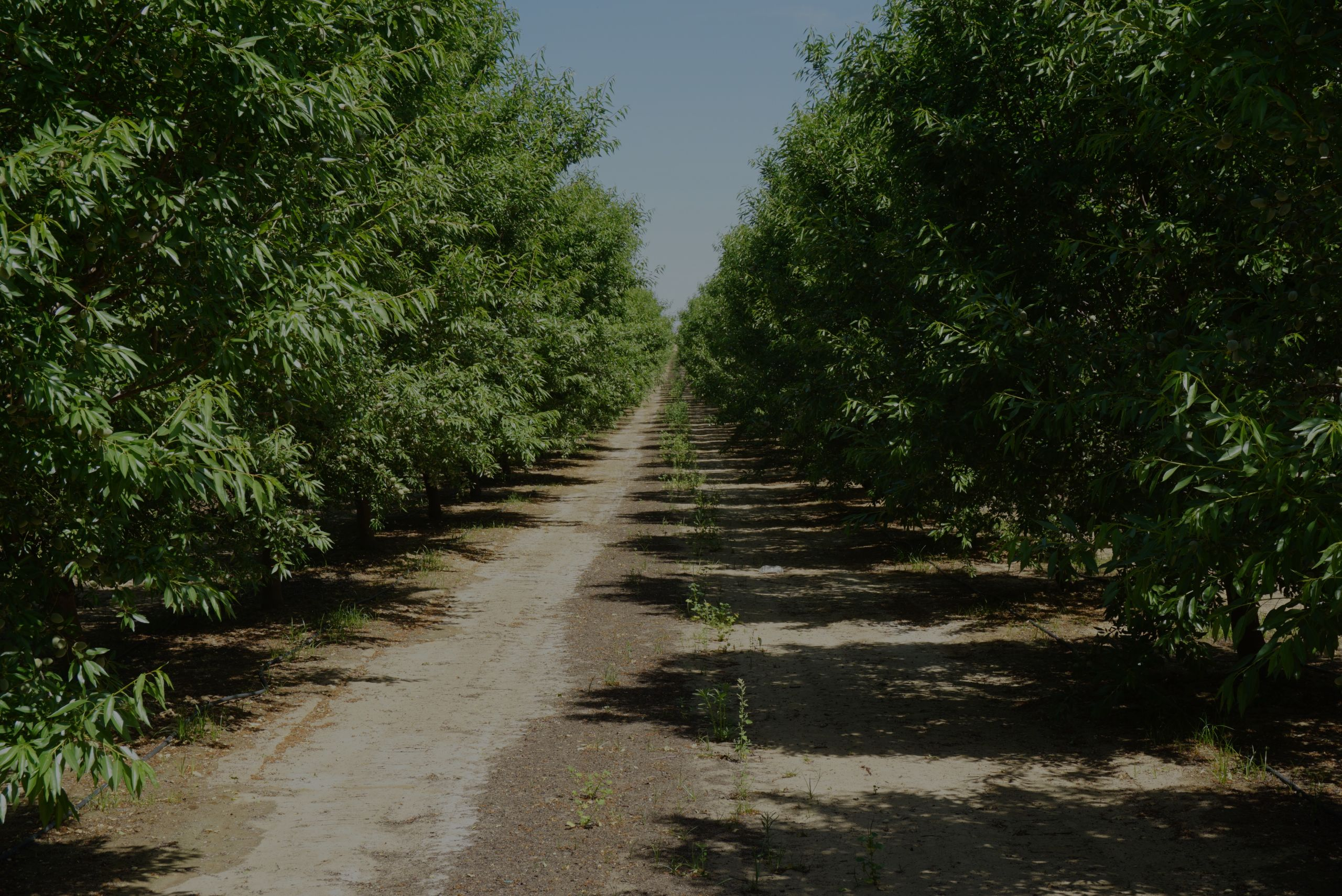 Almond Orchard For Sale