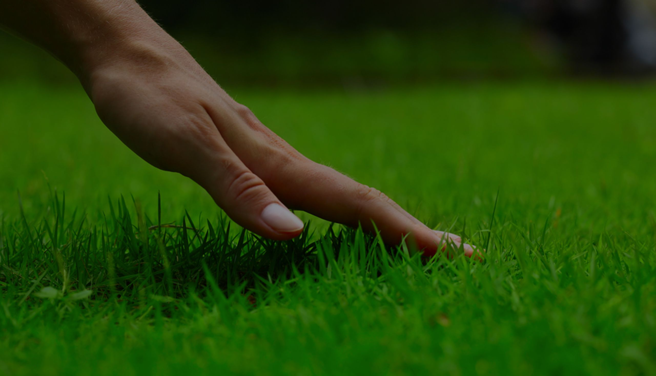 Keeping Your Lawn Alive this Summer