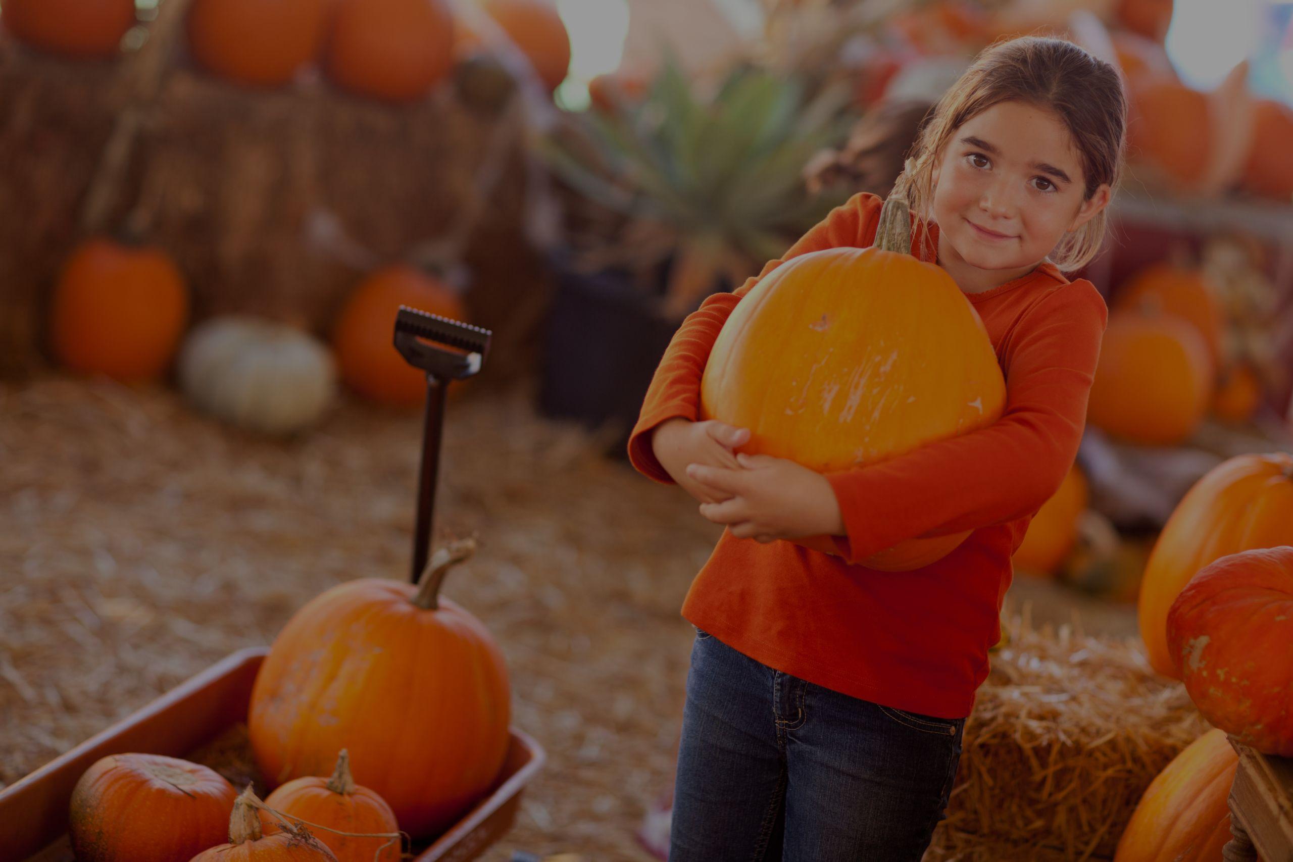 KC Pumpkin Patch Guide