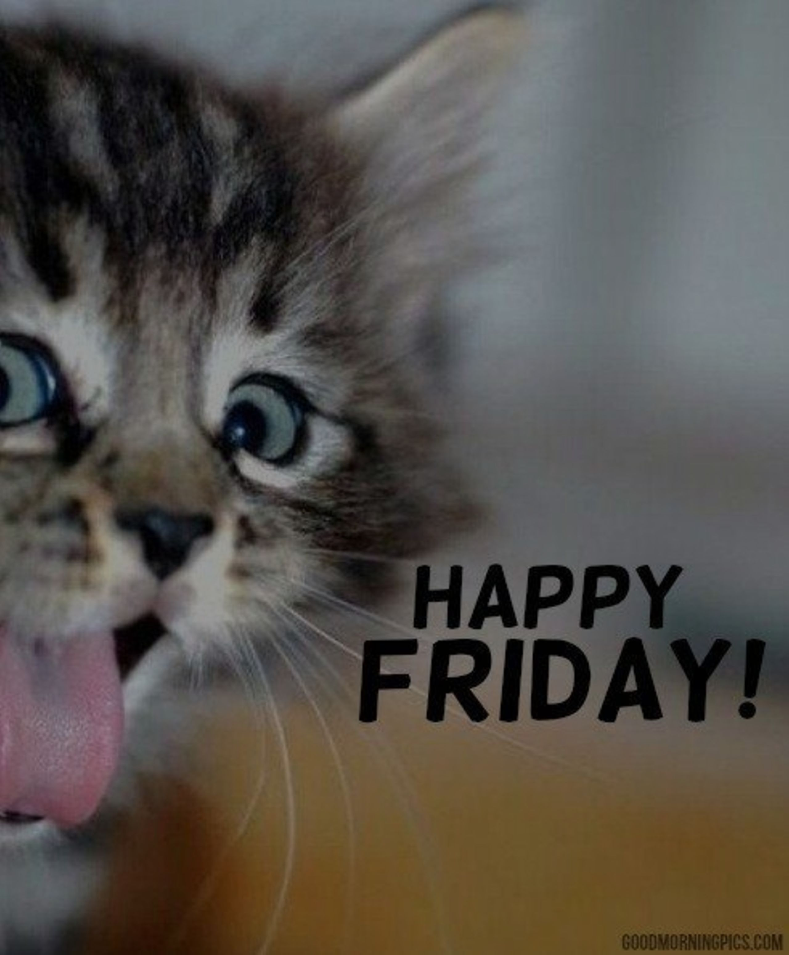 Happy Friday From the Tammy Mrotek Team!