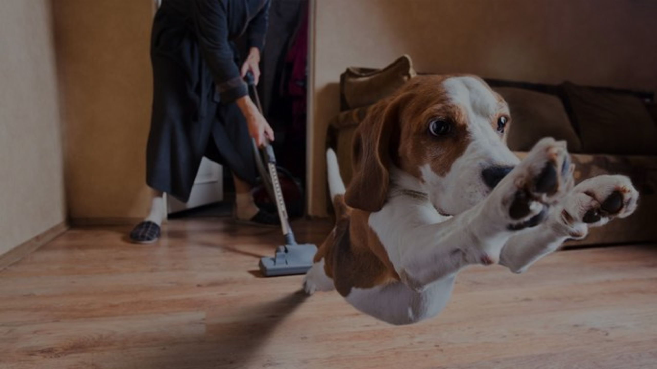 A Housecleaning Checklist for People Hosting Guests With Pet Allergies
