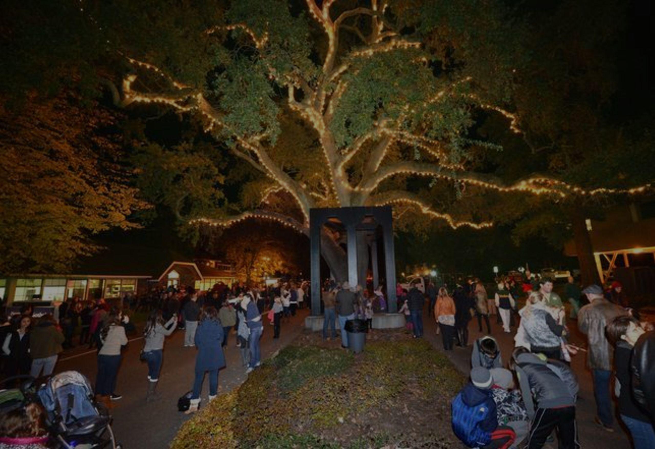 Danville Tree Lighting