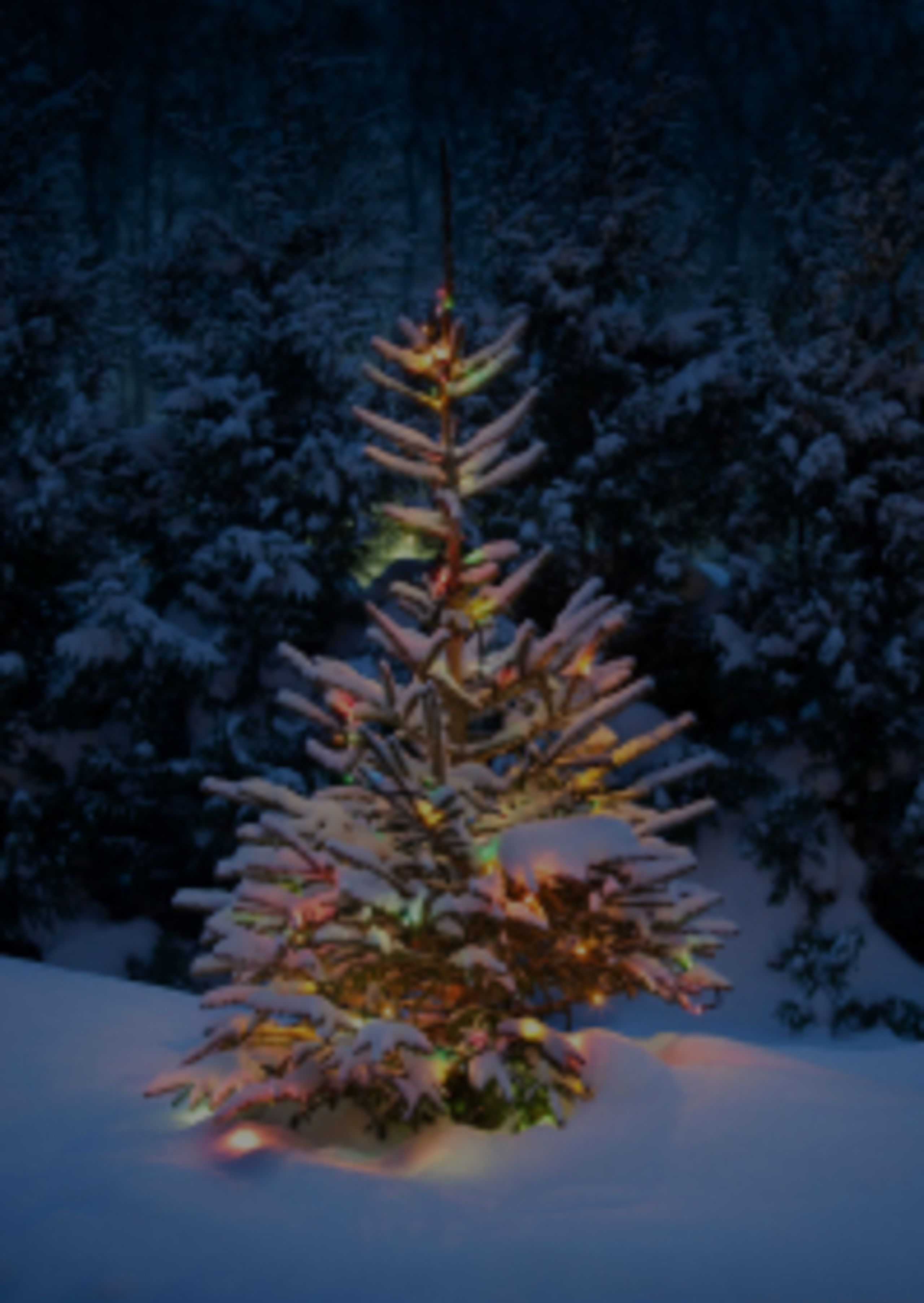 Cut Your Own Tree: Geneva, St. Charles, and Batavia