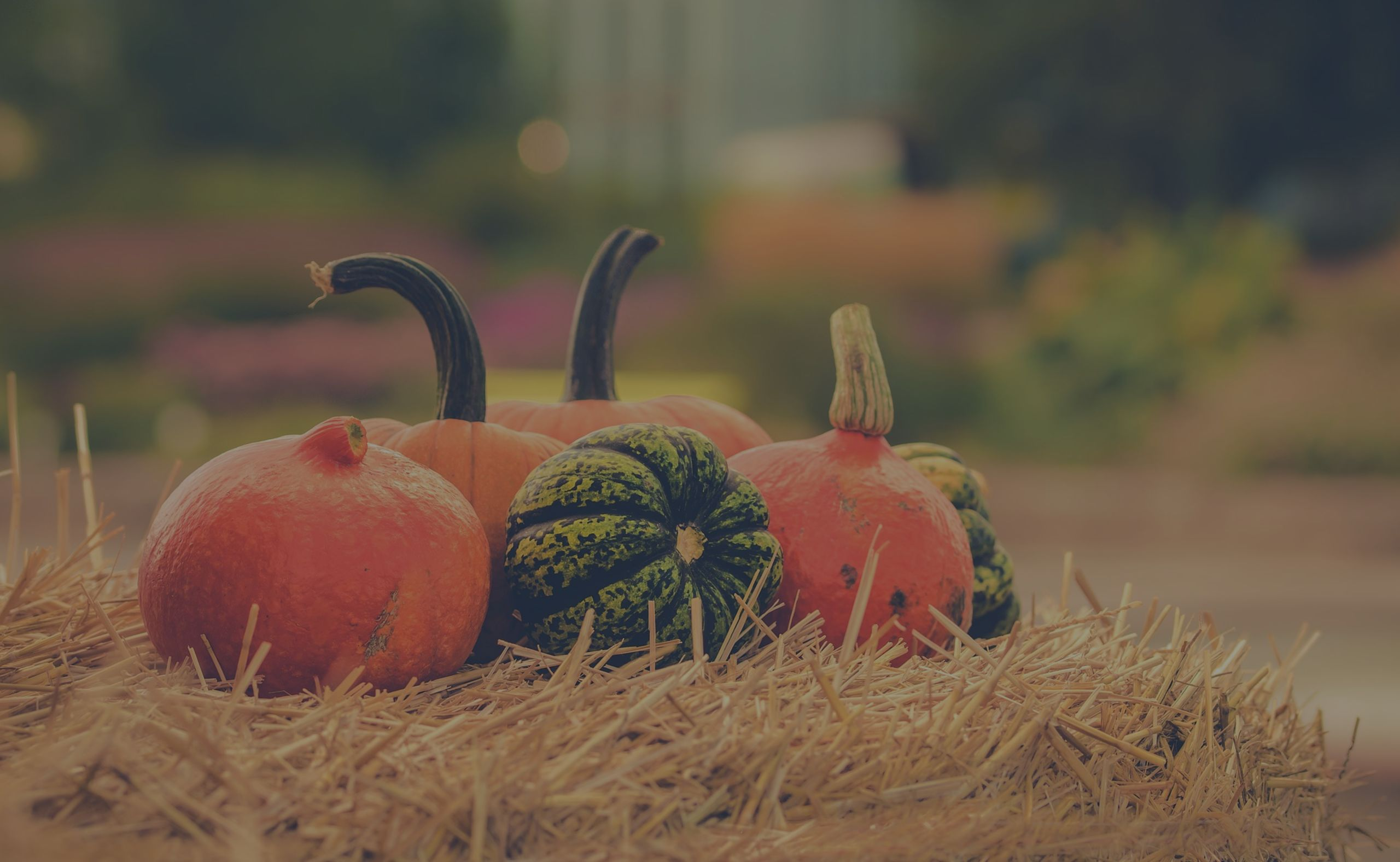 October 2019 Events in Charleston, SC