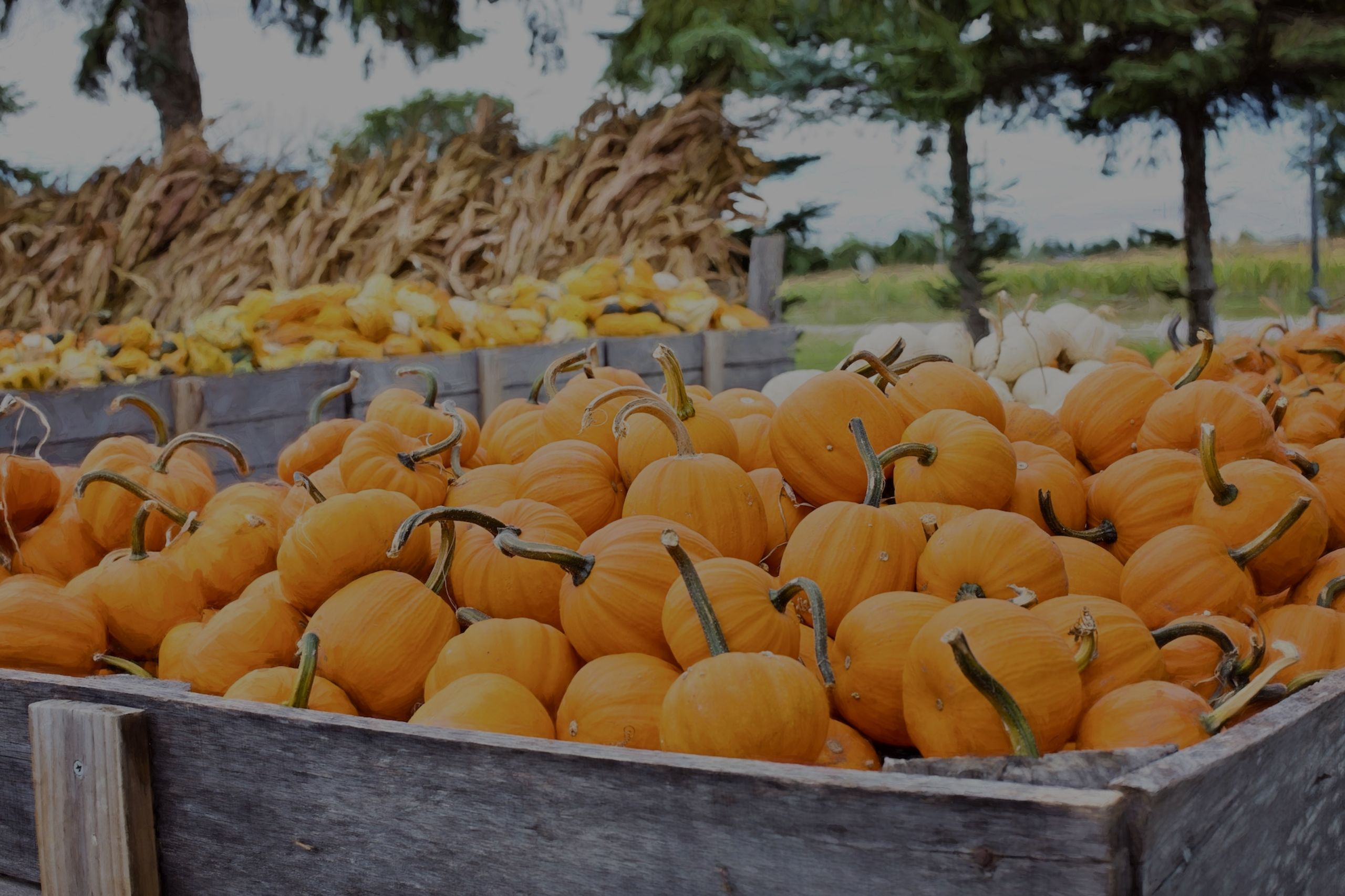 Get Local   October 2019 Events