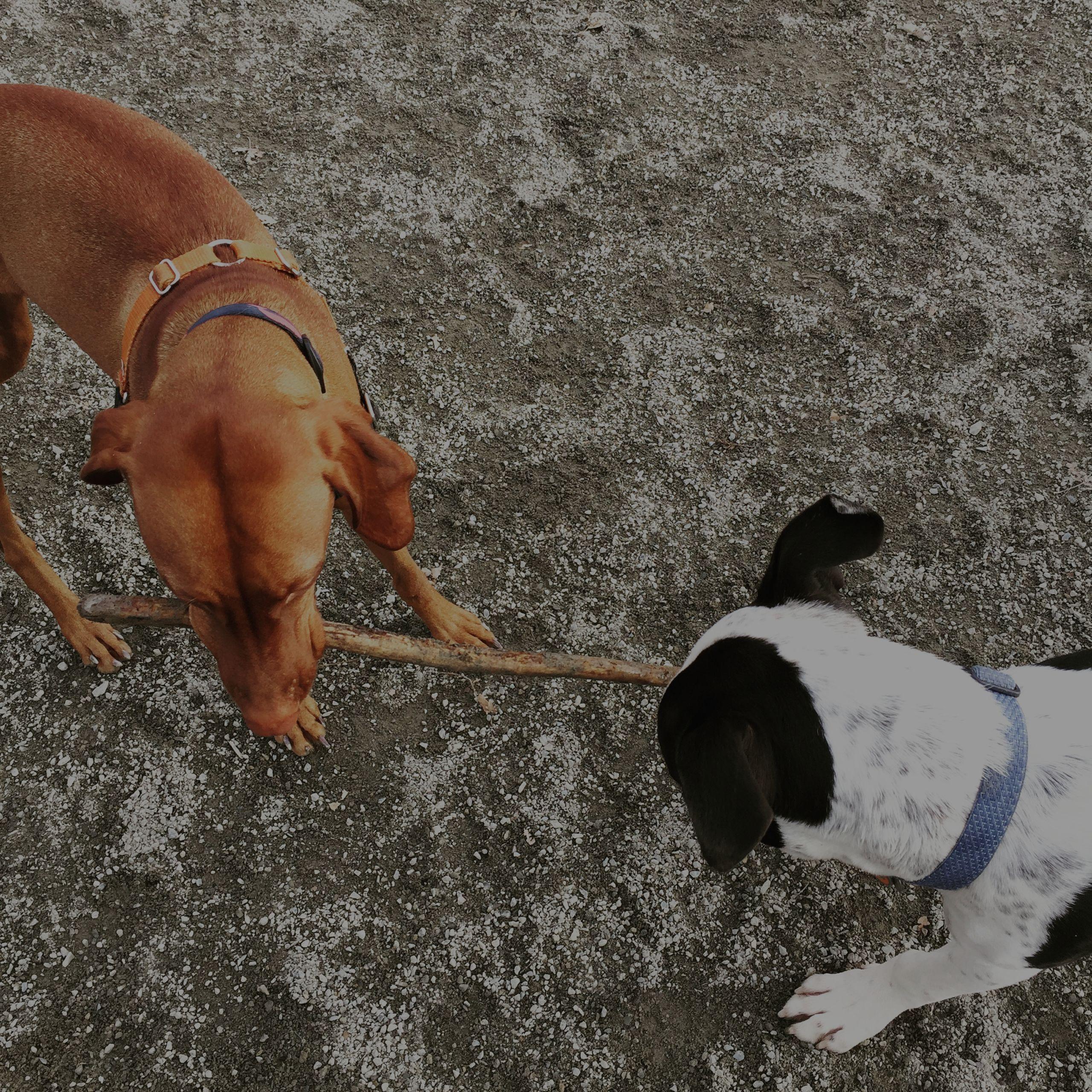 Seattle Offleash Dog Parks