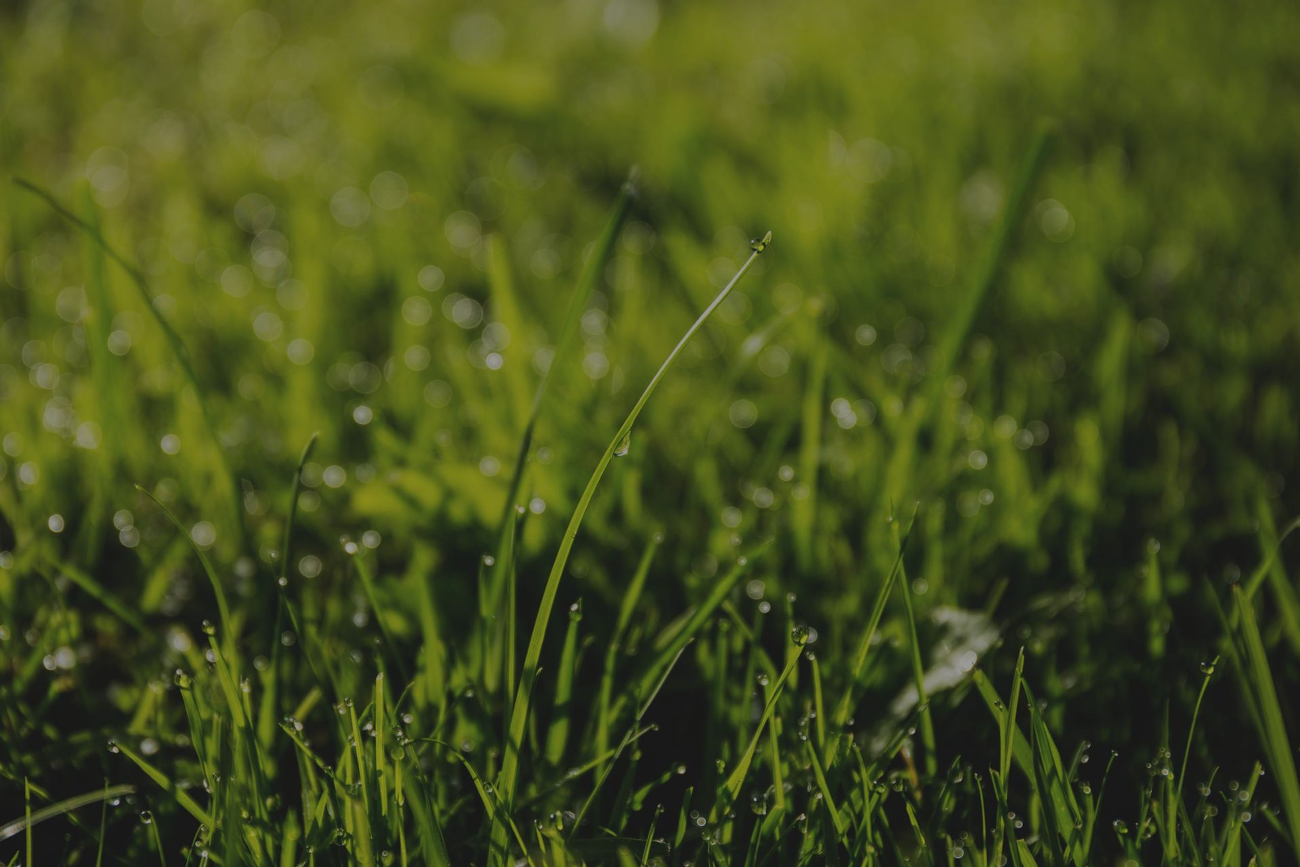 ​Taking Care of Your Michigan Lawn Without Wasting Resources