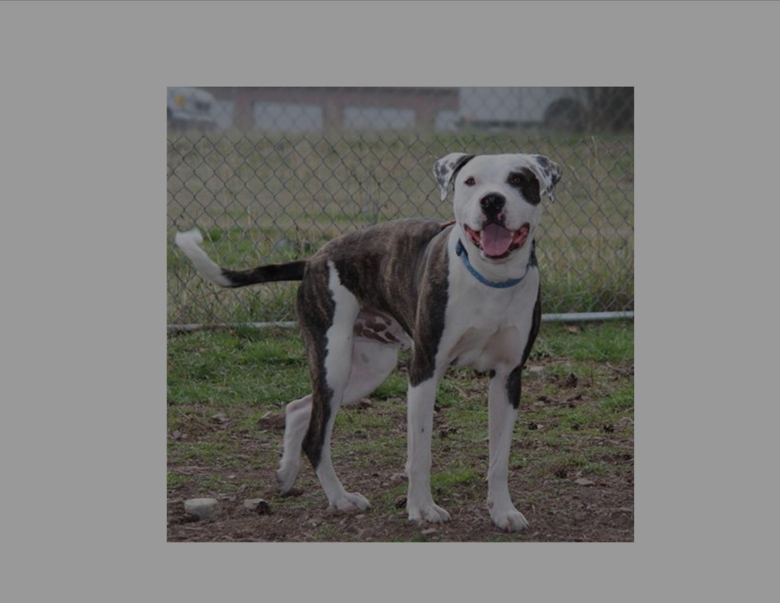 Meet Oakley of the Western Montana Humane Society!