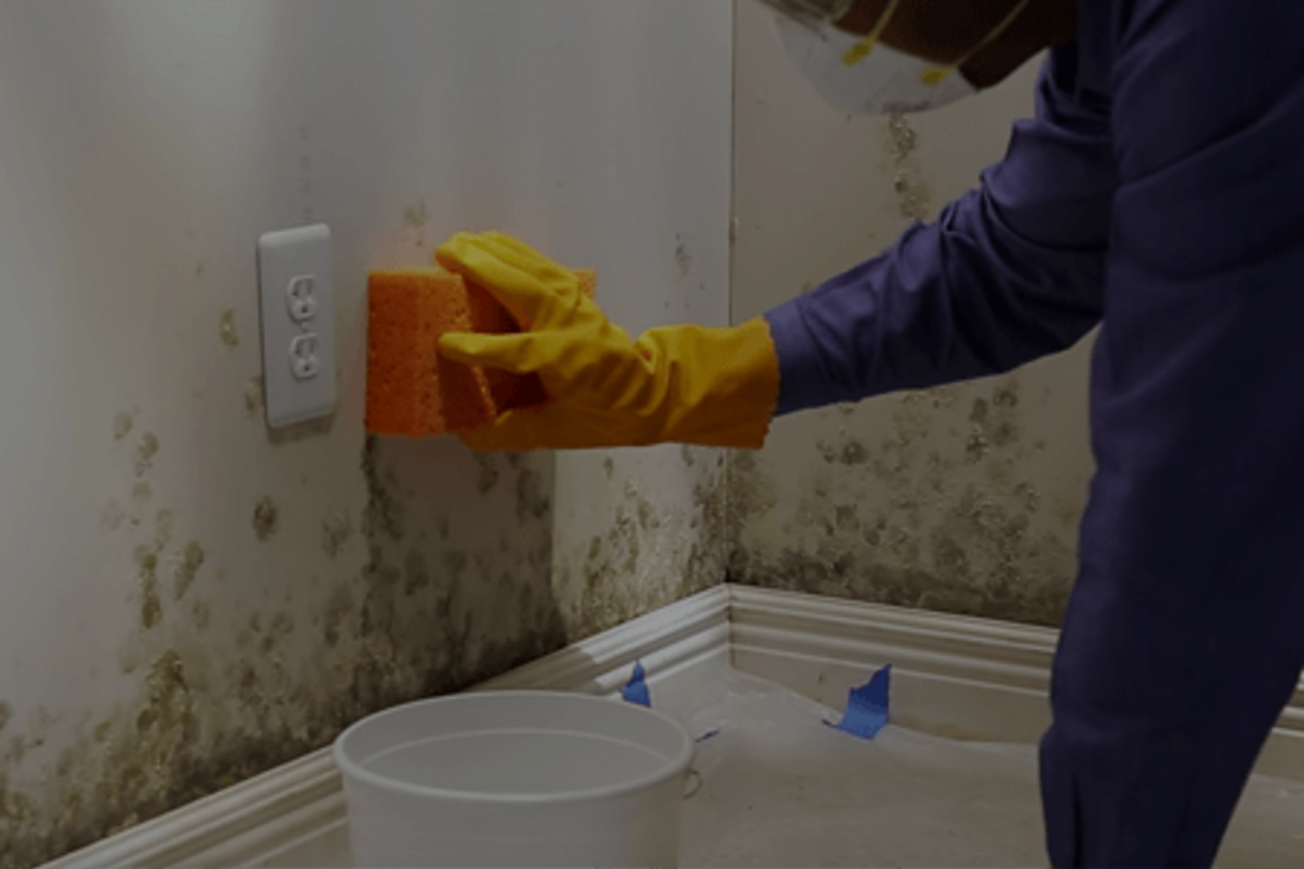 What You Should Know About Mold