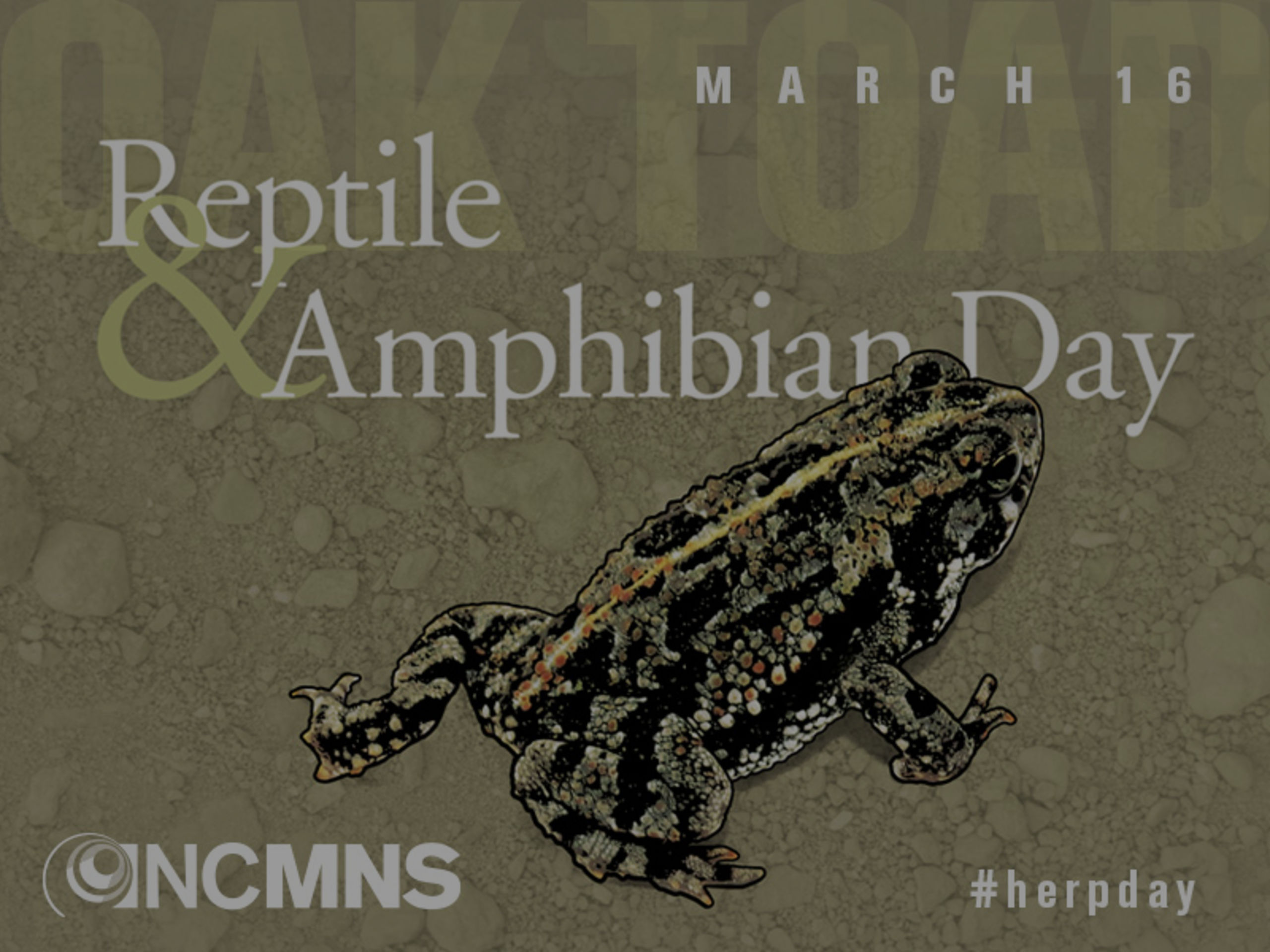 Reptile & Amphibian Day 2019 at NC Museum of Natural Sciences
